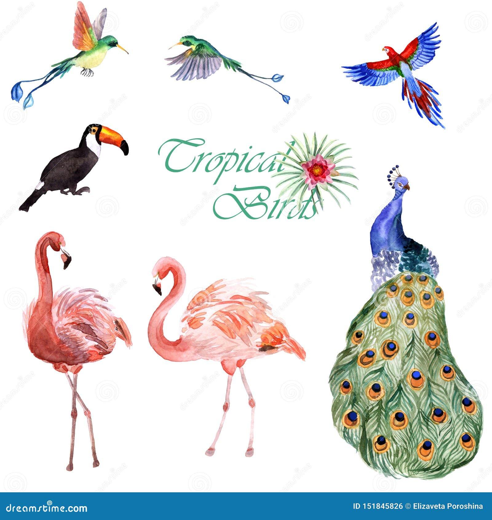 Akwareli kolekcja tropikalni ptaki odizolowywający na białym tle