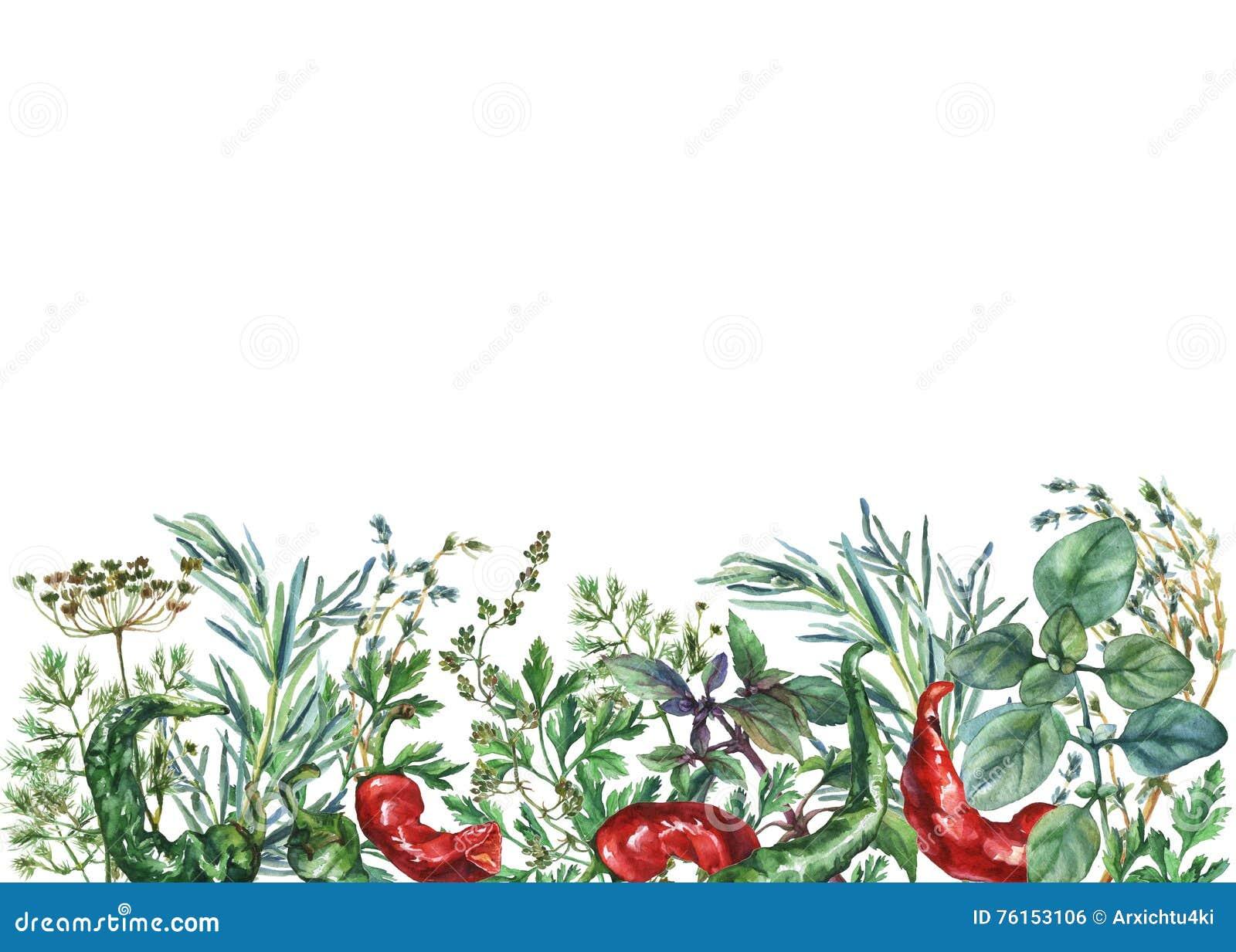 Akwareli pikantność i ziele rama