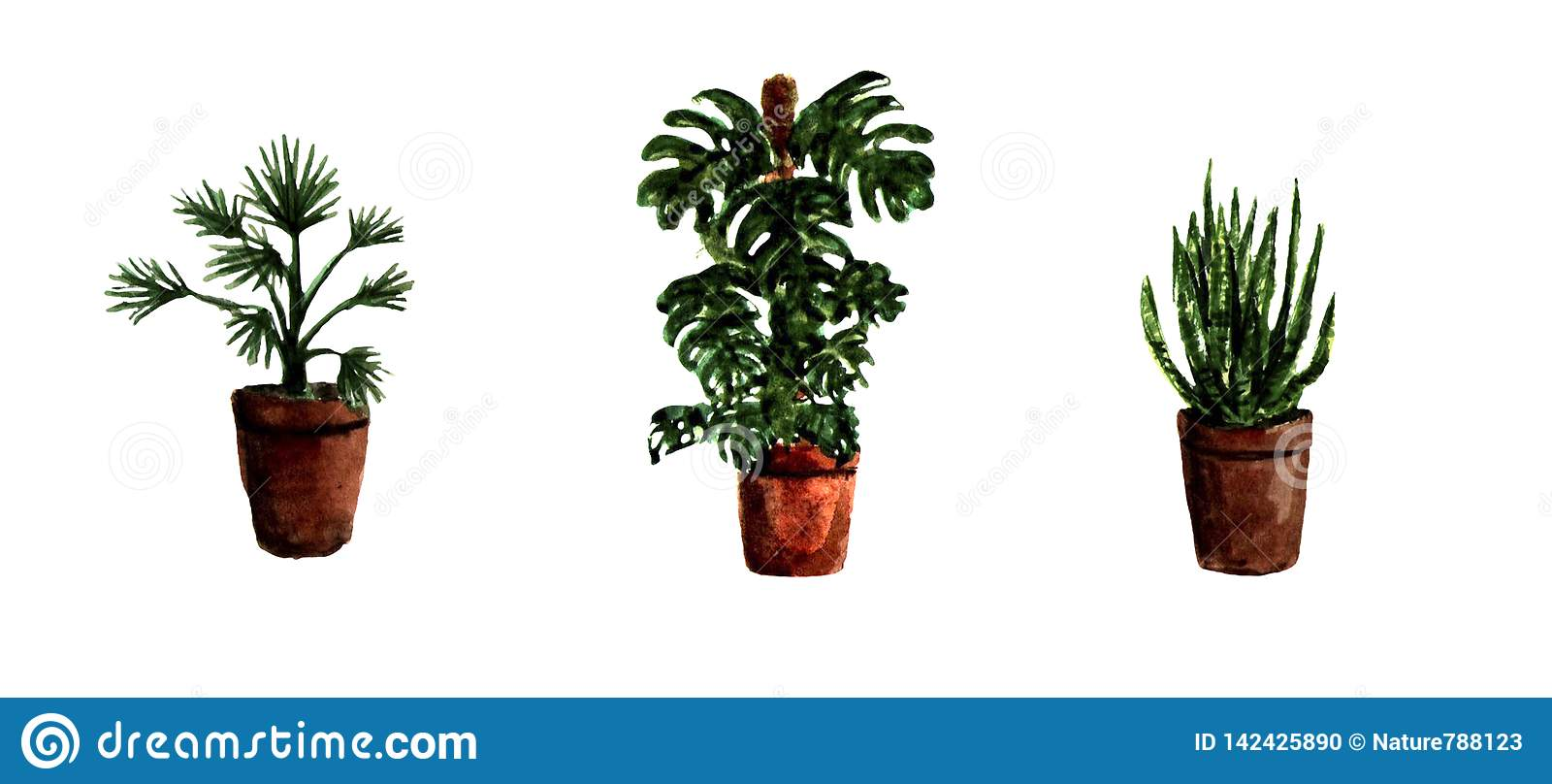 Akwareli Ręki Malować Domowe Zielone Rośliny Dekoracyjna
