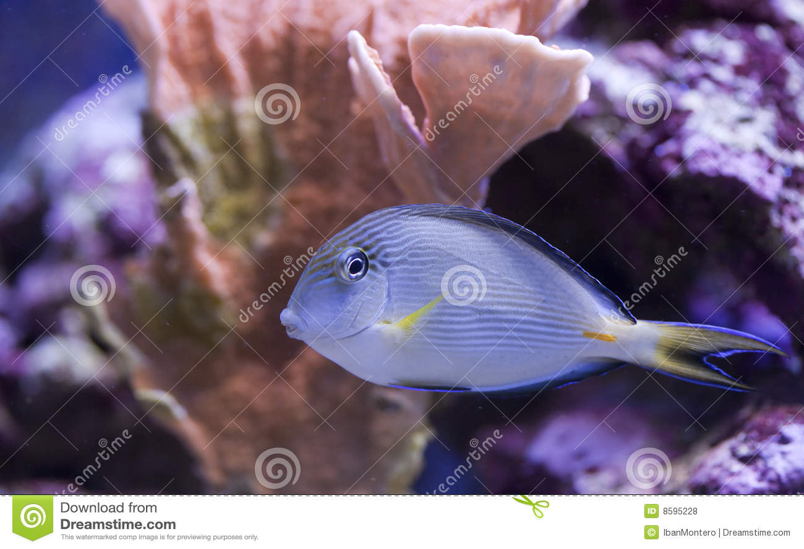 Akwarium zbiornik rybi morski