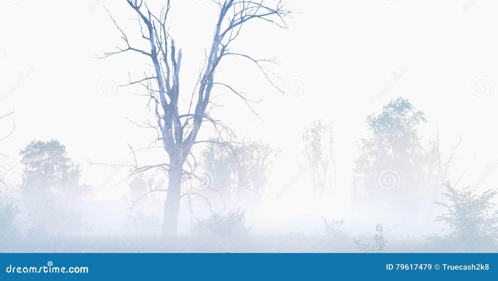 Além da névoa, árvore secada velha em uma névoa, paisagem misteriosa