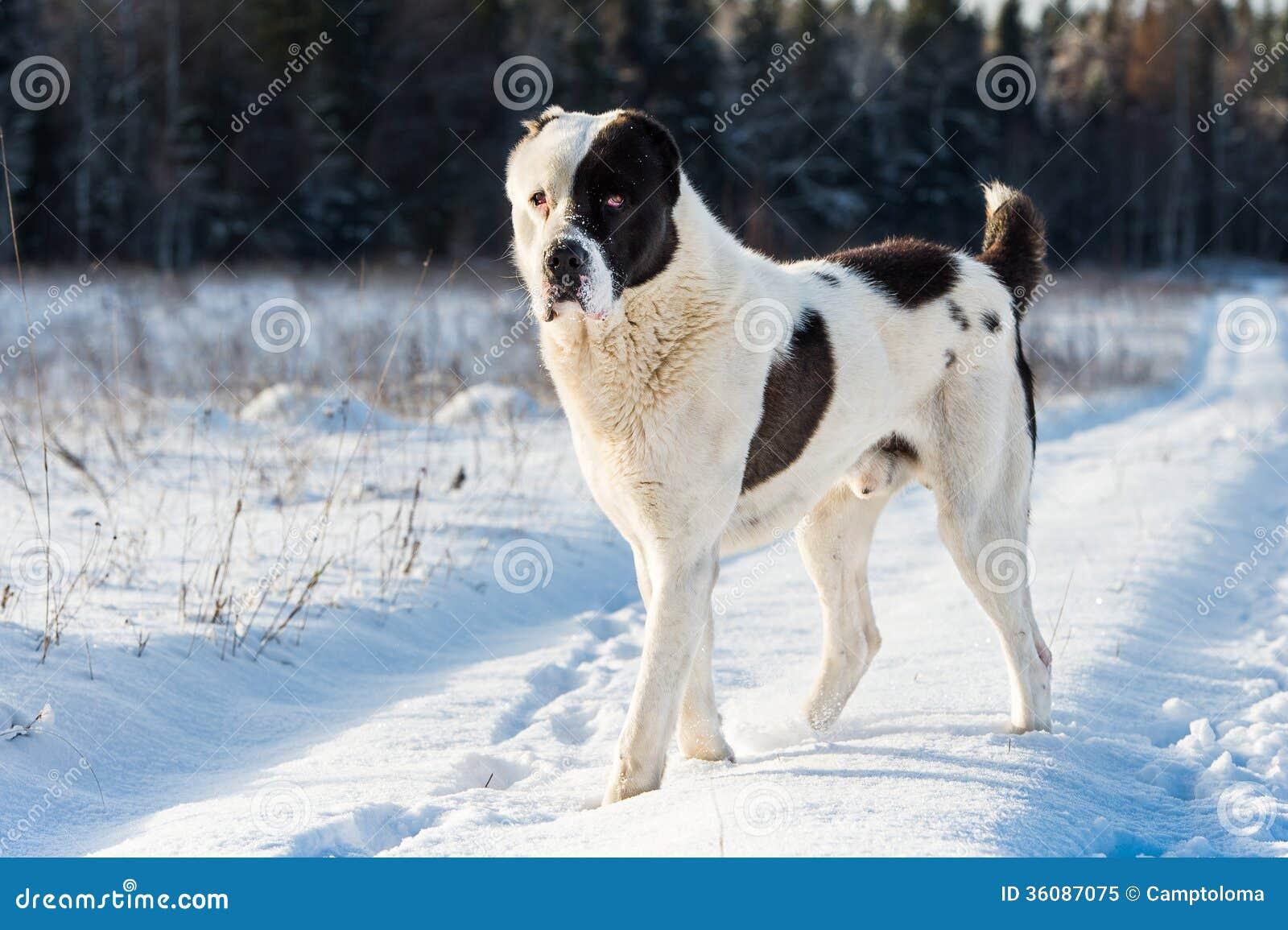 dog running vector