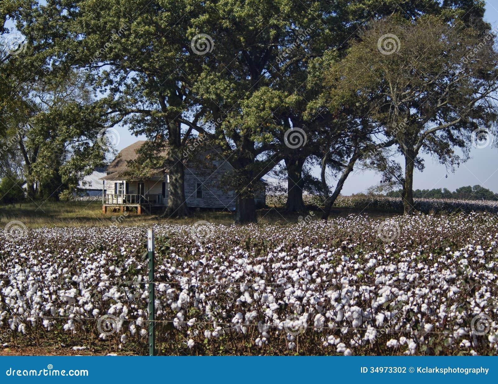Alabama Cotton Crops - Gossypium