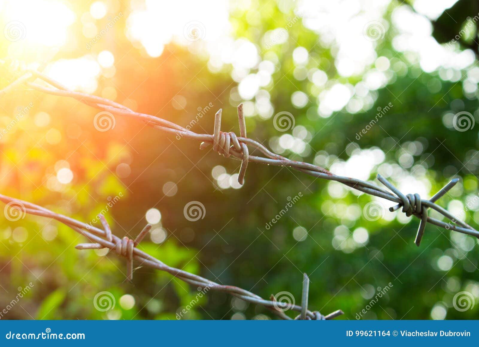 Alambre de púas en día soleado Naturaleza soleada detrás del barbwire Cerca protectora alrededor del jardín tropical
