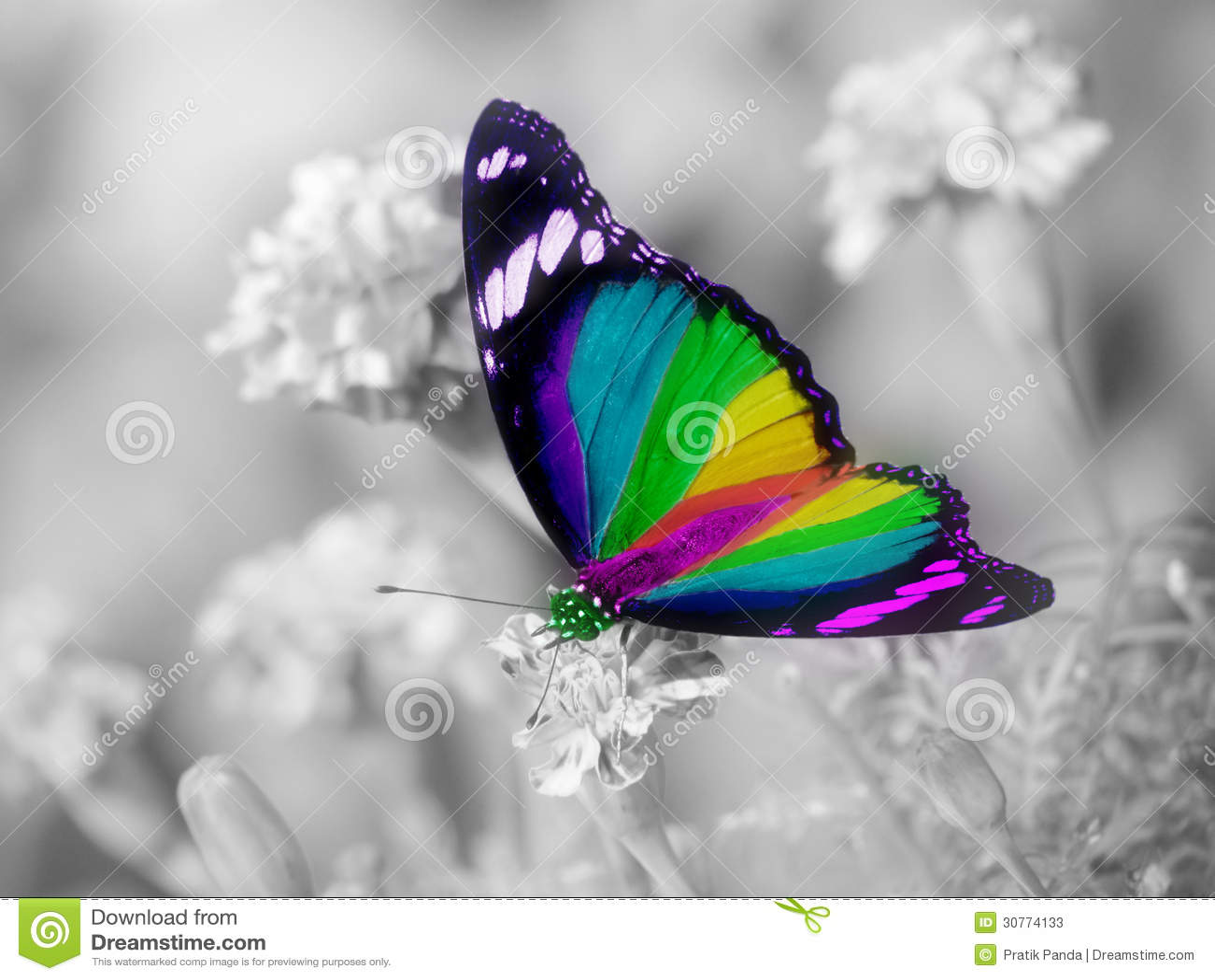 Alas coloridas de la mariposa del arco iris