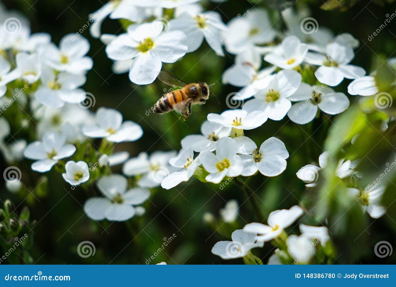 Working Bee at Alaska Botanical Garden