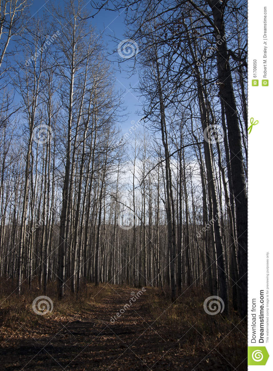 Download Alaska Highway Canada Remote Trail Stock Photo - Image of ground, columbia: 61708050