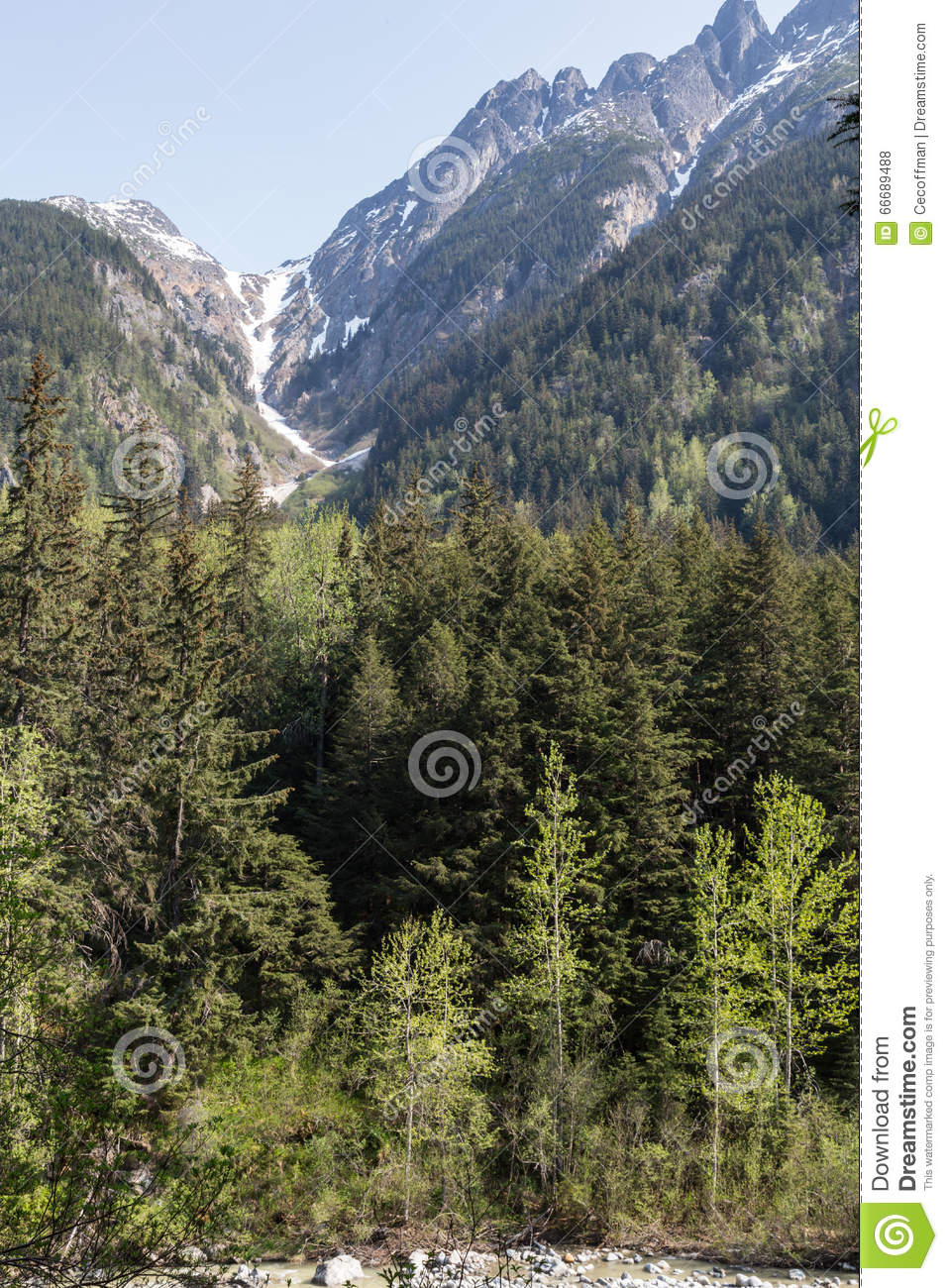 Alaska s Mountains and Forests