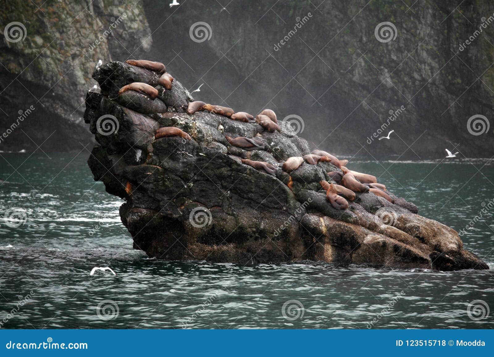 Alaskan da paisagem com os leões de mar de Steller