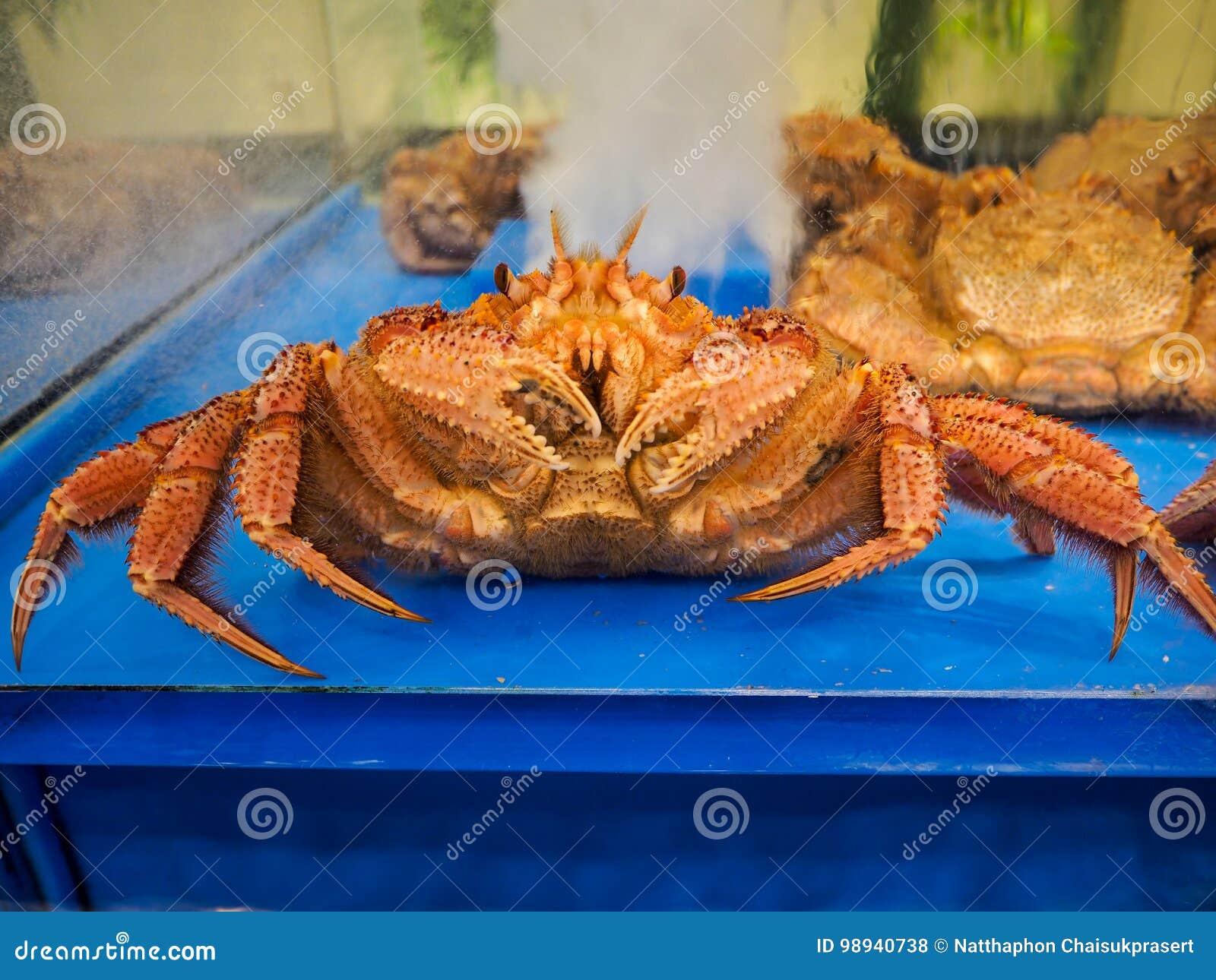 Alaskan grande caranguejo lifed