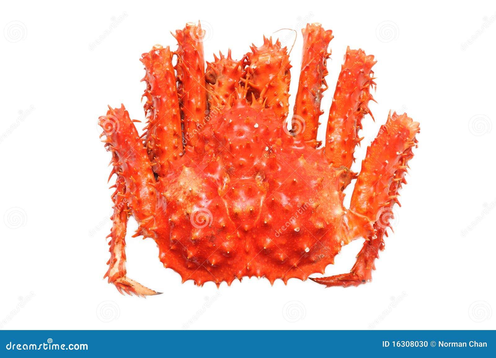 alaskan king crab stock photo image 16308030 running horse clip art free running horse clipart black and white