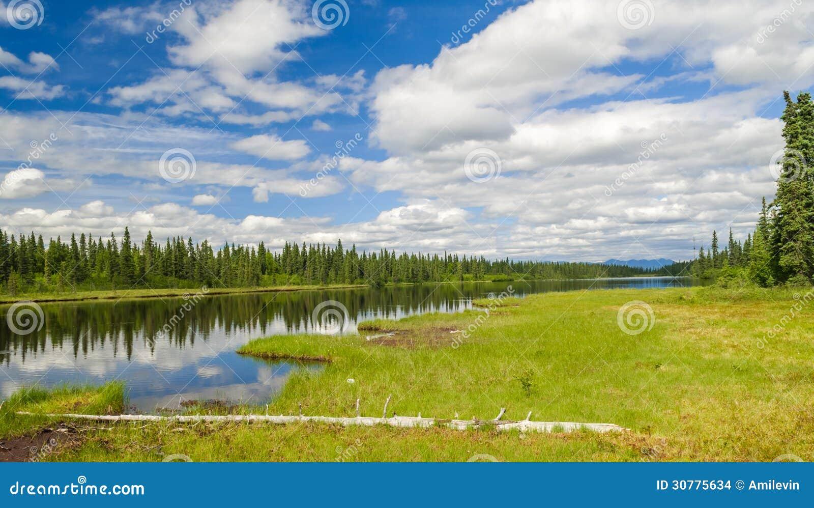 trees summer alaska - photo #28