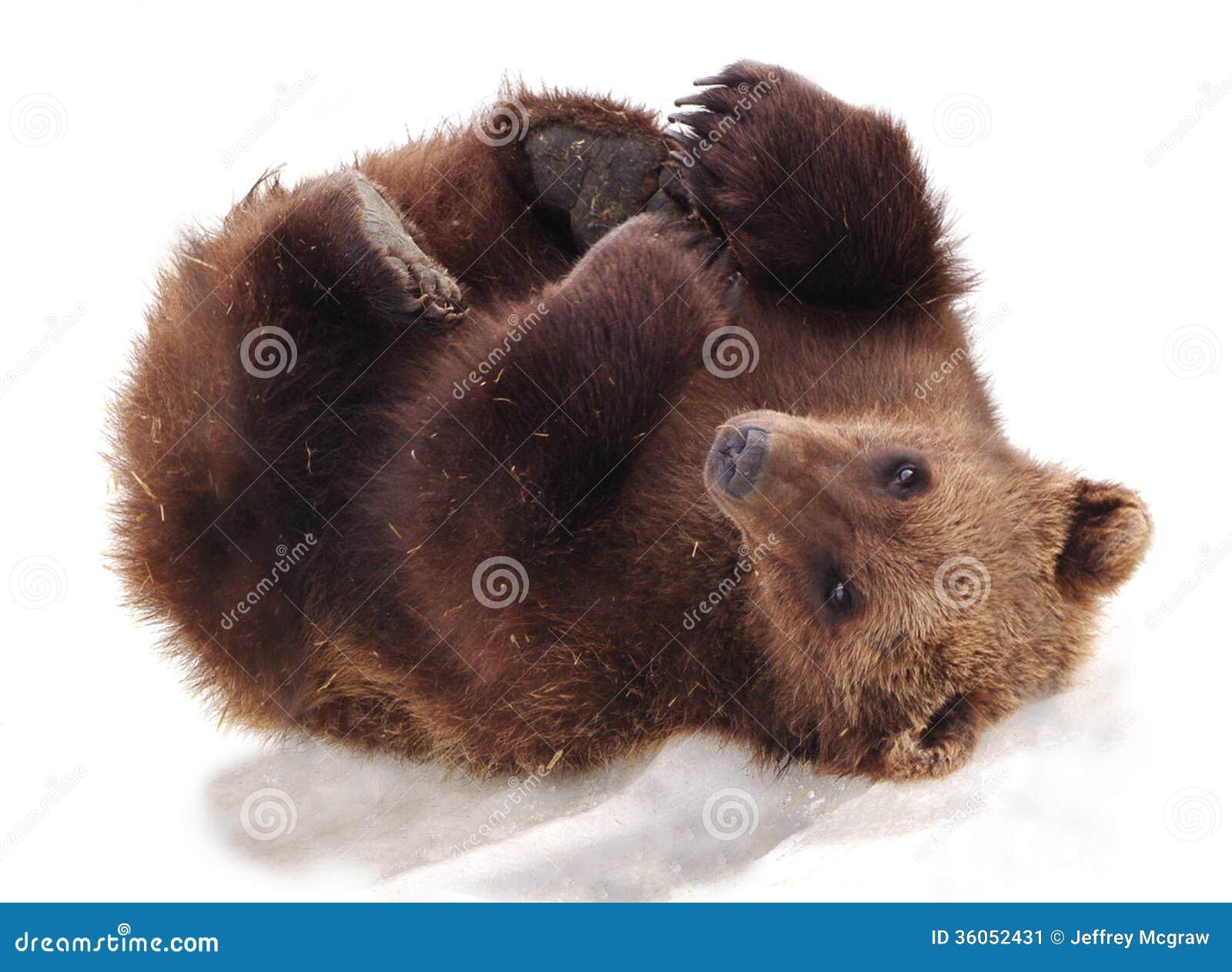 Alaskan peludo