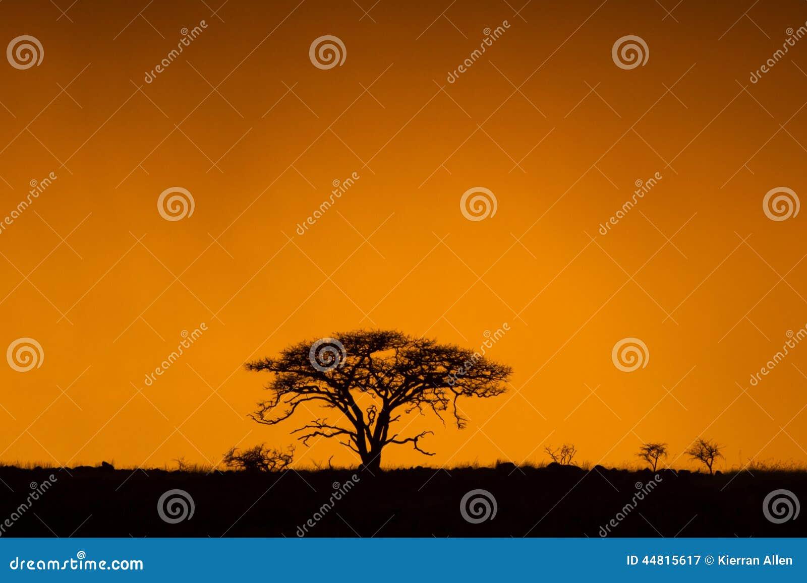 Alba africana Colourful Sudafrica