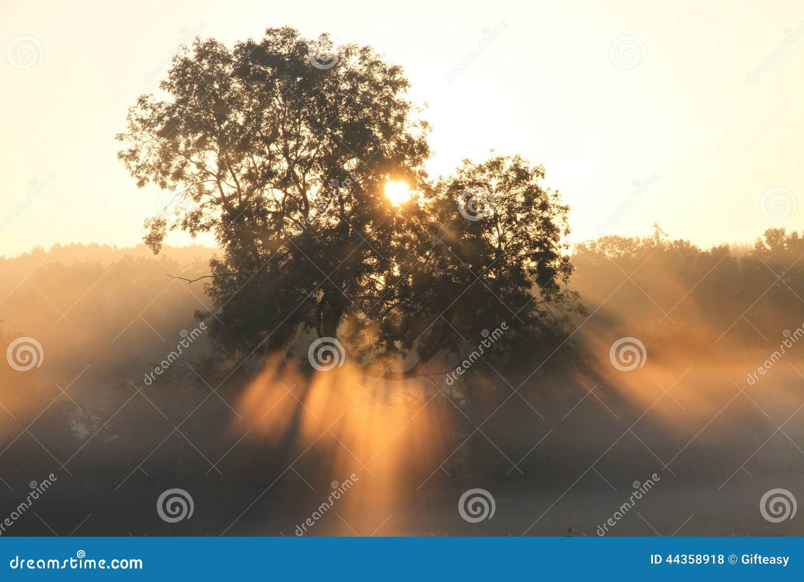 Alba attraverso la foschia e gli alberi