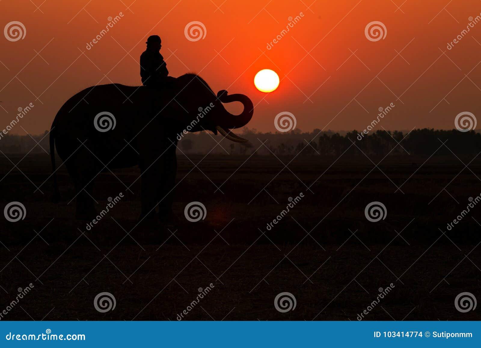 Alba della siluetta dell elefante della Tailandia