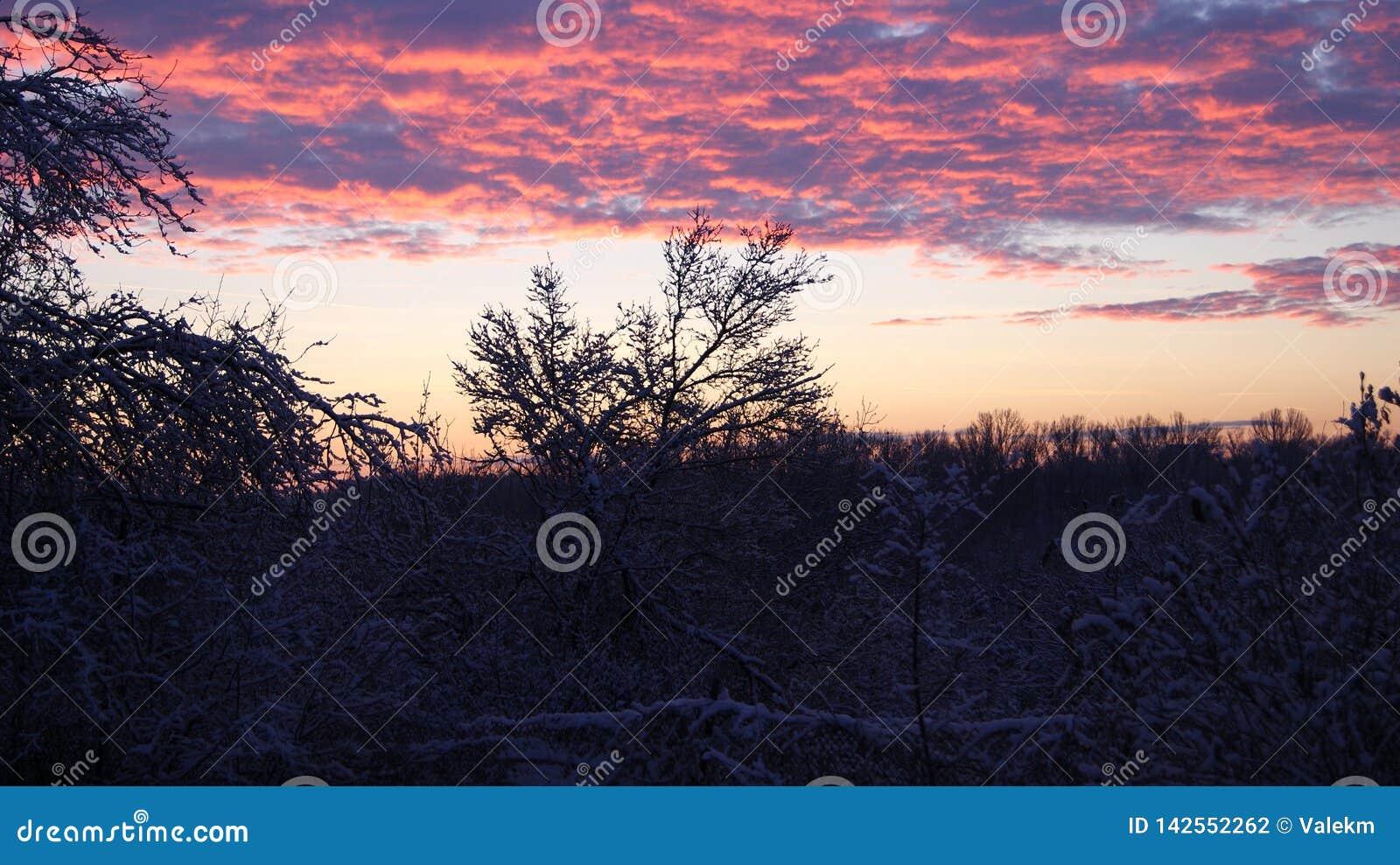 Alba di inverno sopra gli alberi