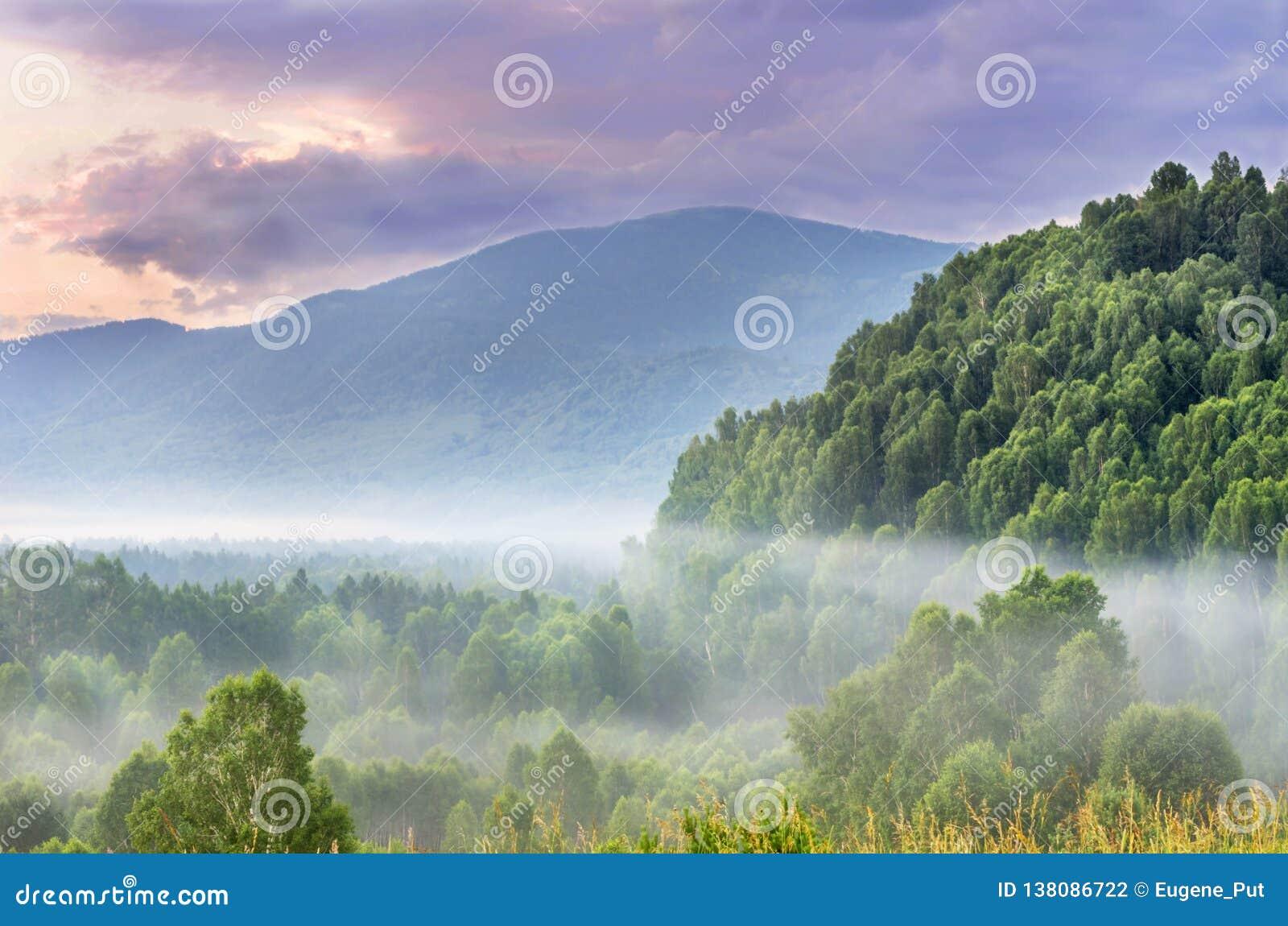 Alba drammatica nelle montagne con Misty Evergreen Forest spessa su una mattina di estate, Ivanovskiy Khrebet Ridge, montagne di