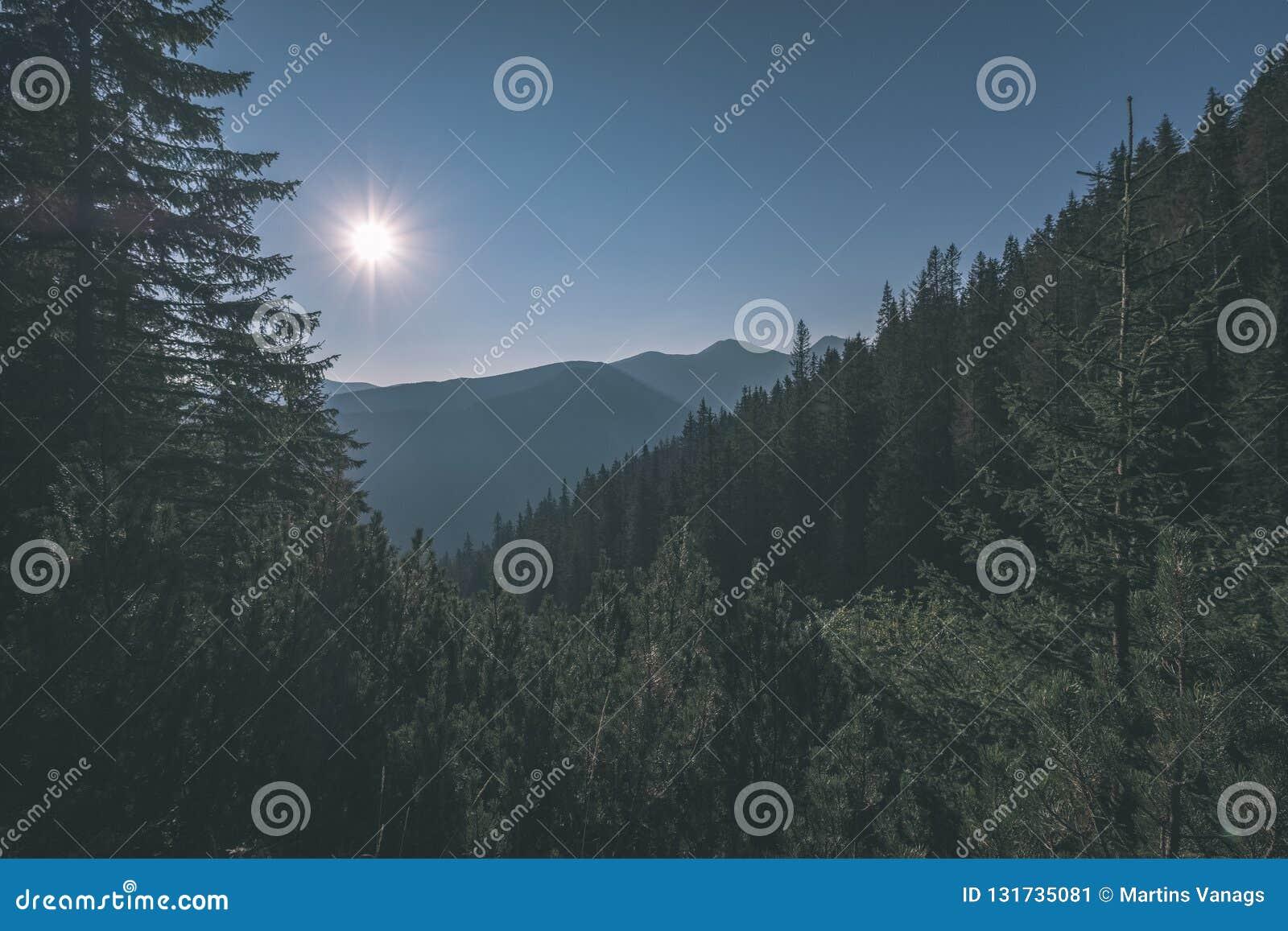 Alba nebbiosa in montagne slovacche di Tatra con i vicoli leggeri in nebbia durante l autunno scuro nelle tracce di escursione -