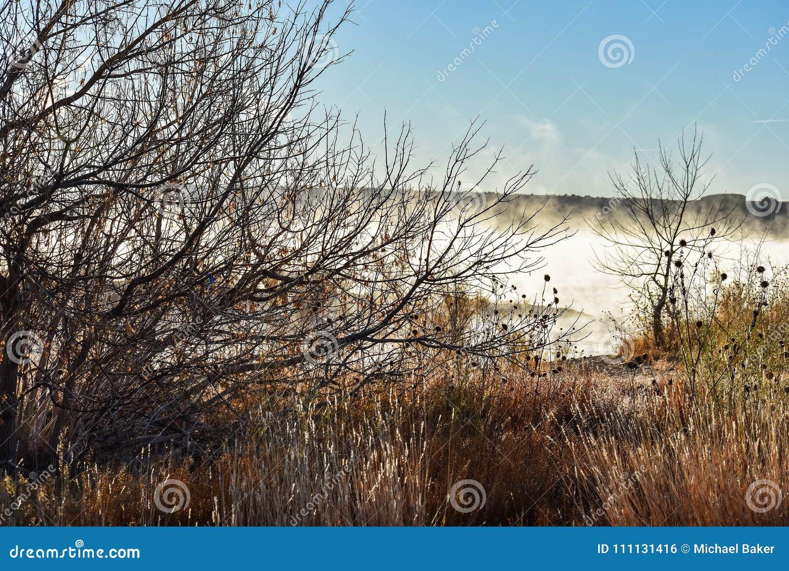 Alba nebbiosa nel lago