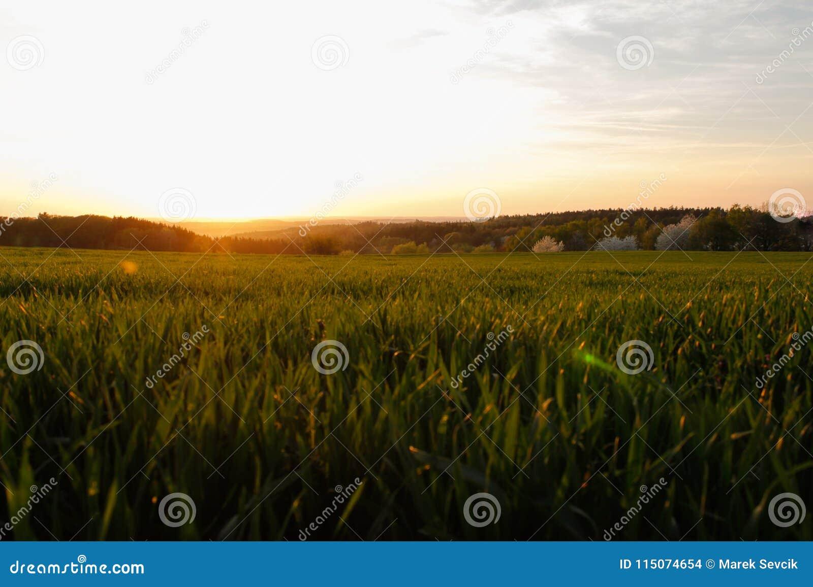 Alba soleggiata della campagna, campi verdi e prati Cieli blu