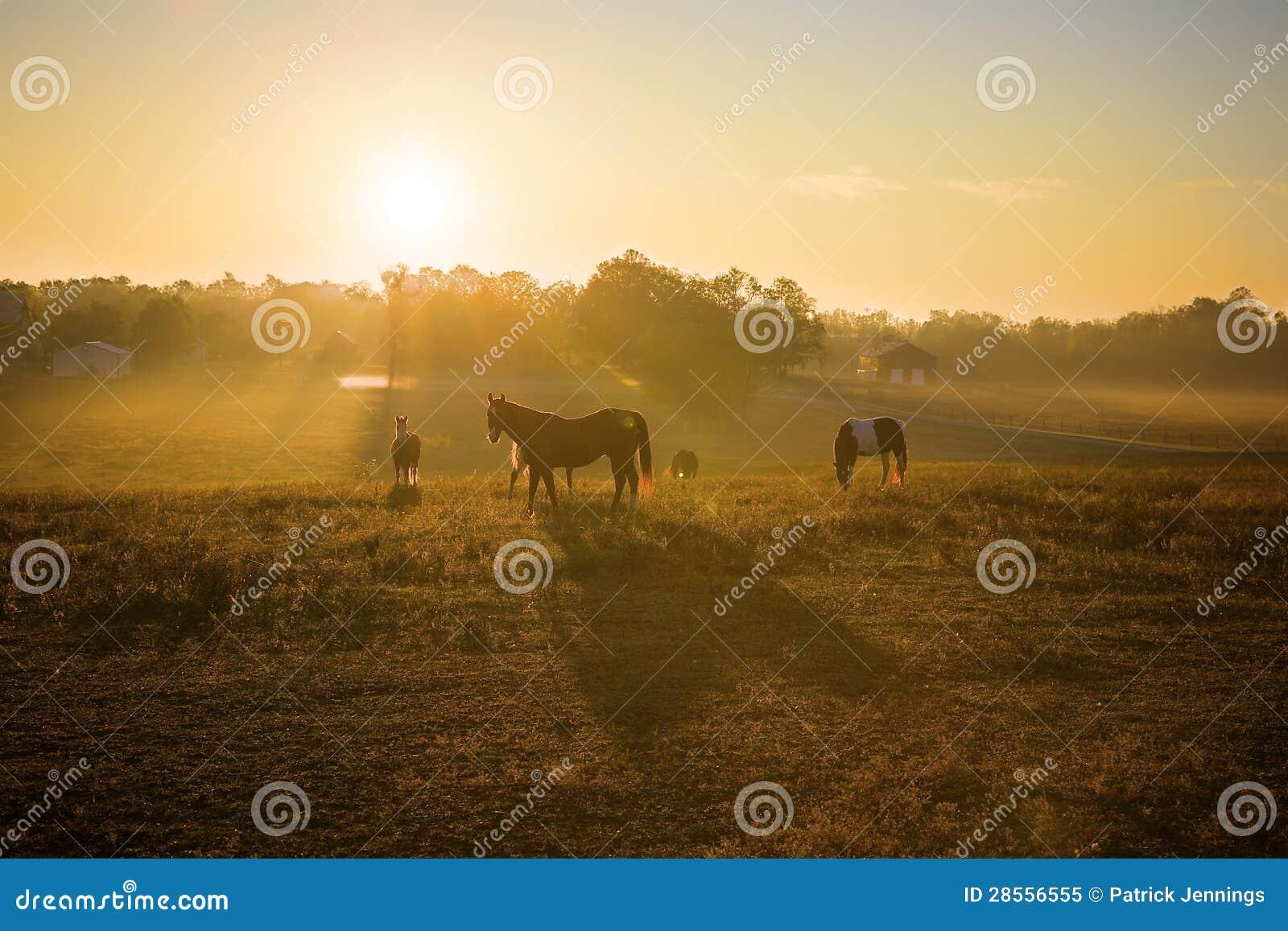 Alba sopra i cavalli