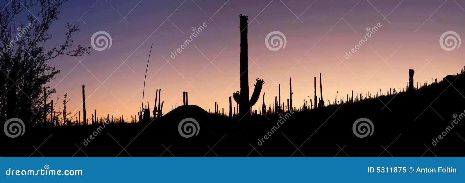 Download Alba Sopra Il Deserto Di Sonoran Immagine Stock - Immagine di ovest, sole: 5311875