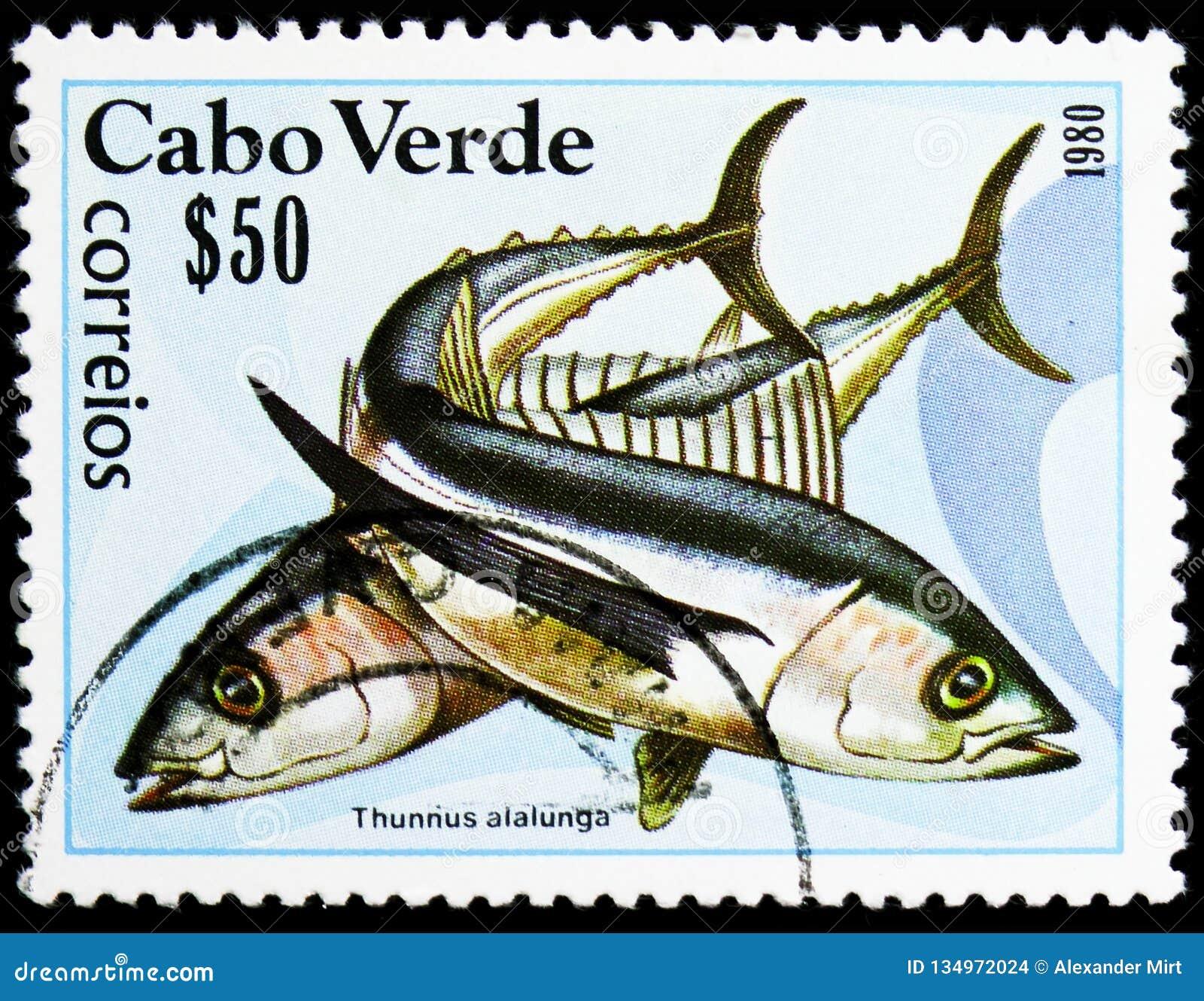 Albacore Tuna (Thunnus alalunga), Fishes serie, circa 1980