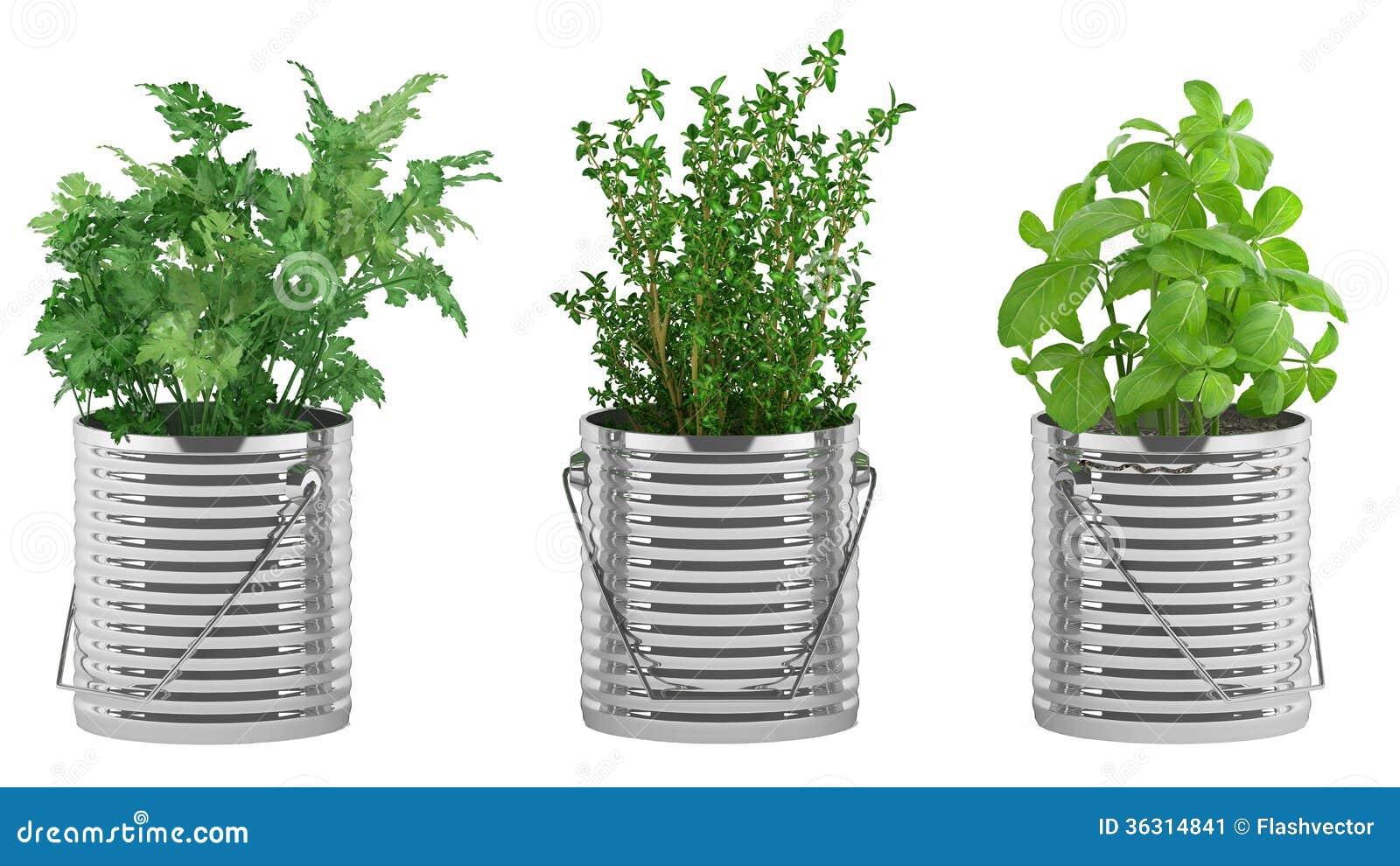 Albahaca tomillo perejil en las macetas del metal stock for Fotos de plantas en macetas