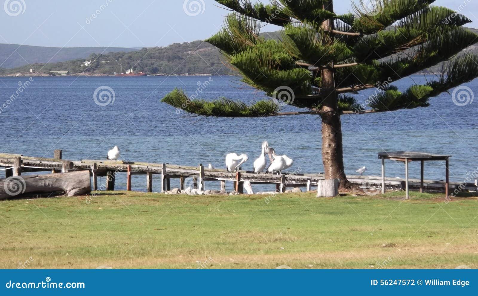 albany western australian south coast western australia. Black Bedroom Furniture Sets. Home Design Ideas