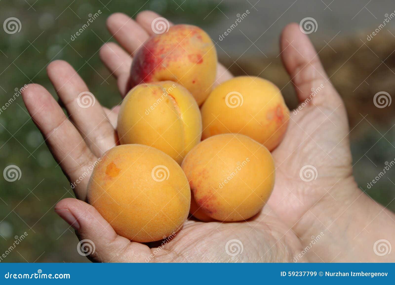Albaricoques en manos