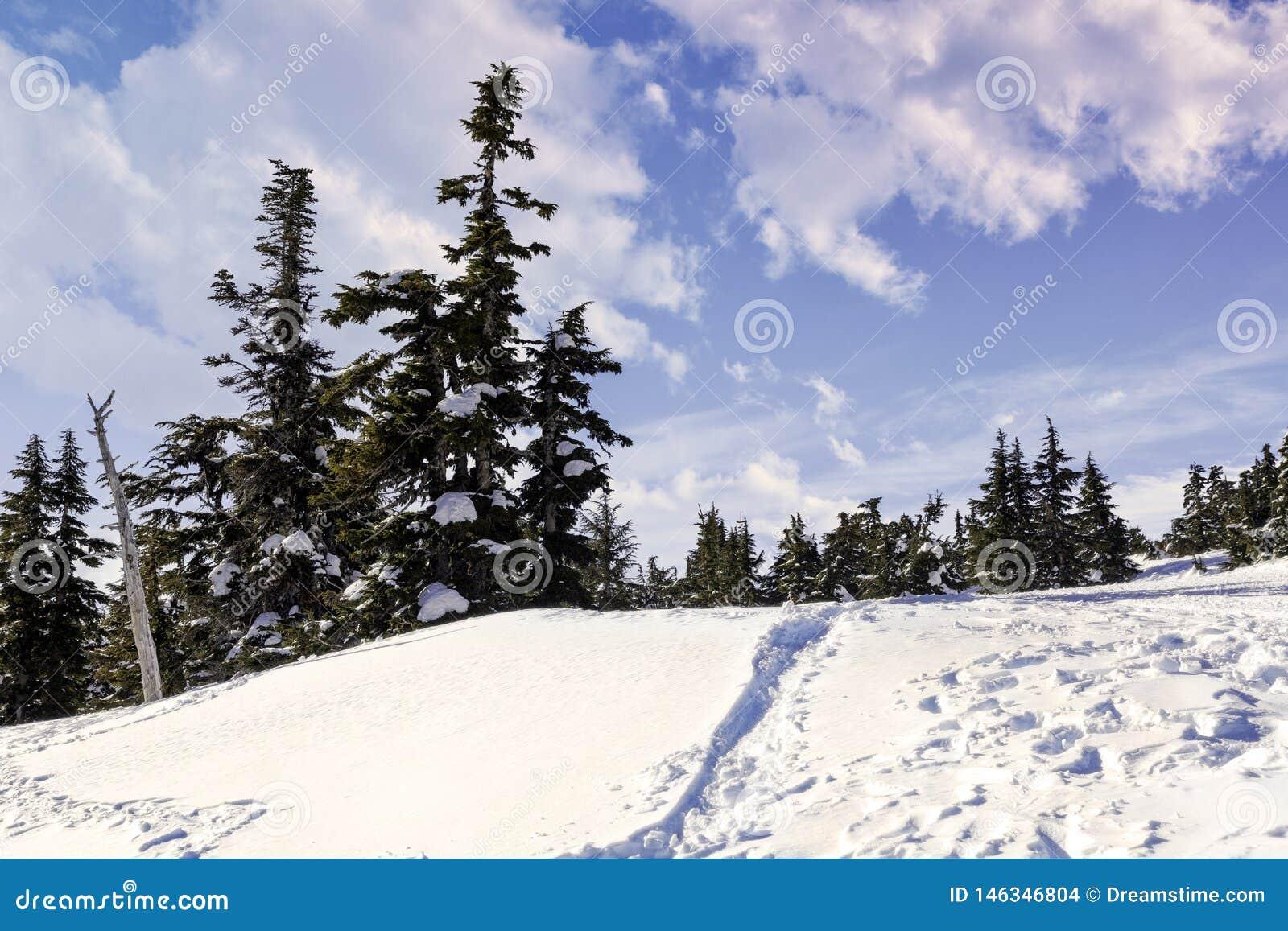 Alberi alpini di inverno con la traccia blu della neve