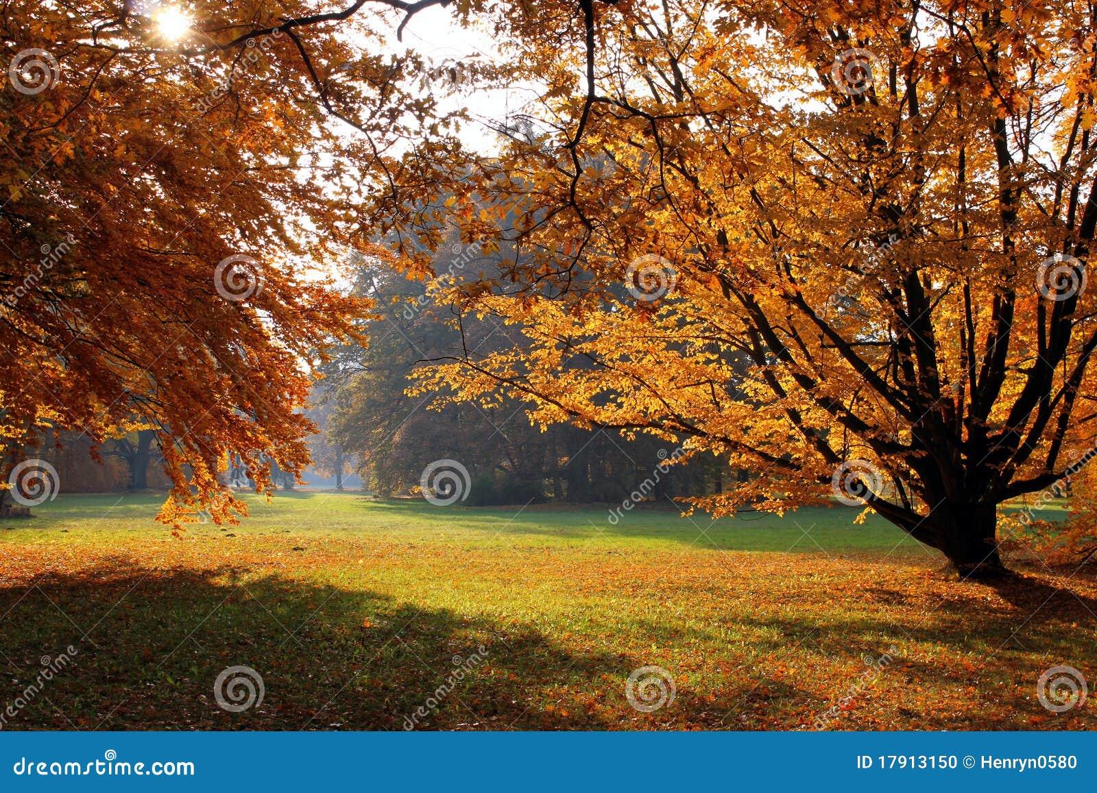 Alberi d 39 autunno in sosta fotografia stock immagine di for Alberi da frutto prezzi