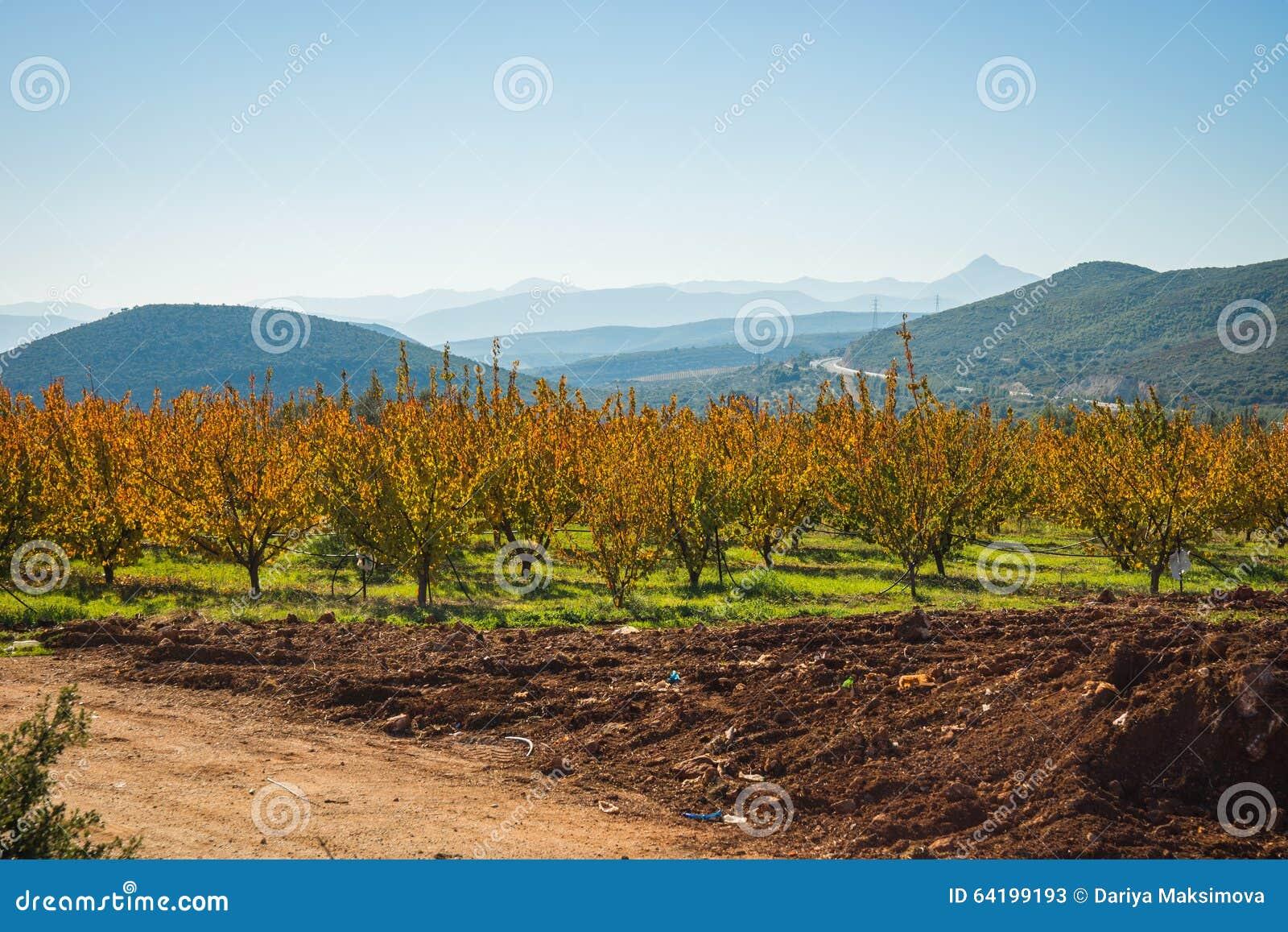 Alberi da frutto autunno su un pendio di collina nel for Alberi da frutto prezzi
