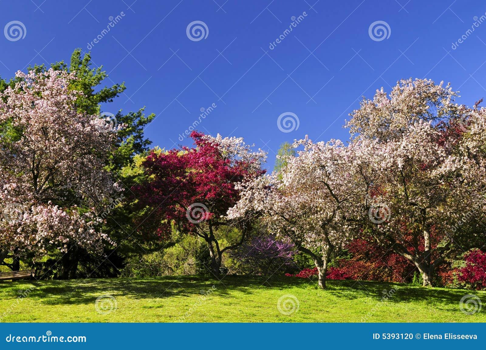 Alberi da frutto di fioritura in la sosta di primavera for Alberi da frutto prezzi