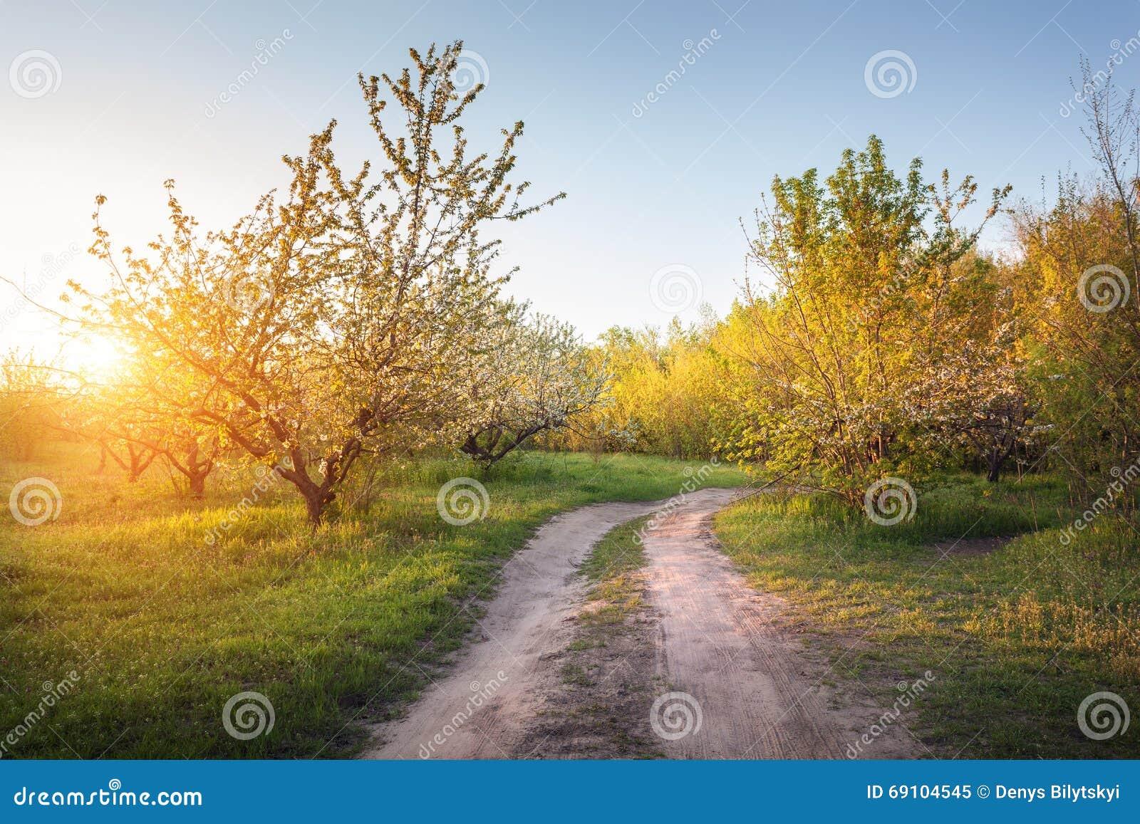 Alberi da frutto di fioritura soli nel giardino con la - Alberi frutto giardino ...
