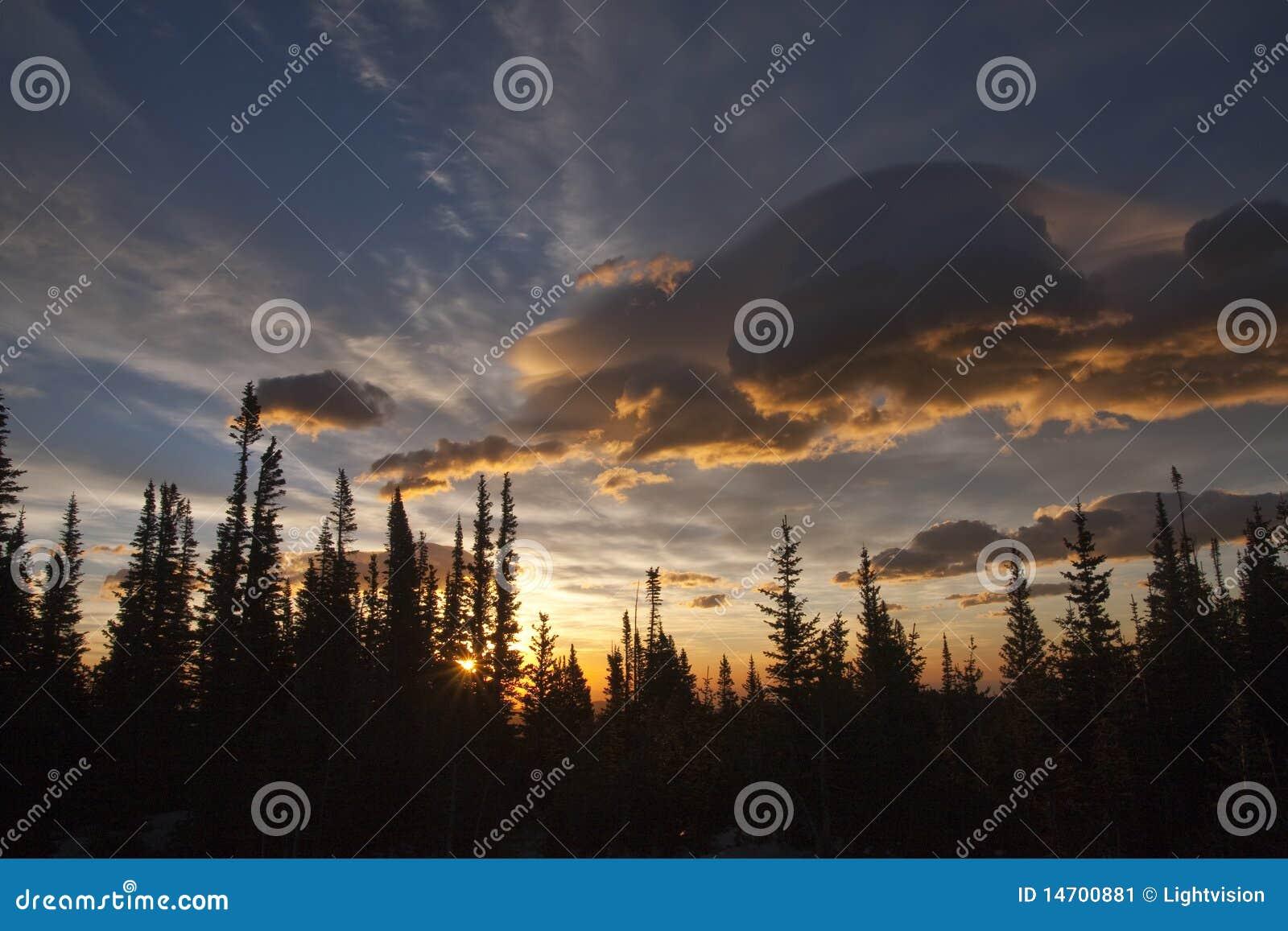 Alberi del evergreen della siluetta