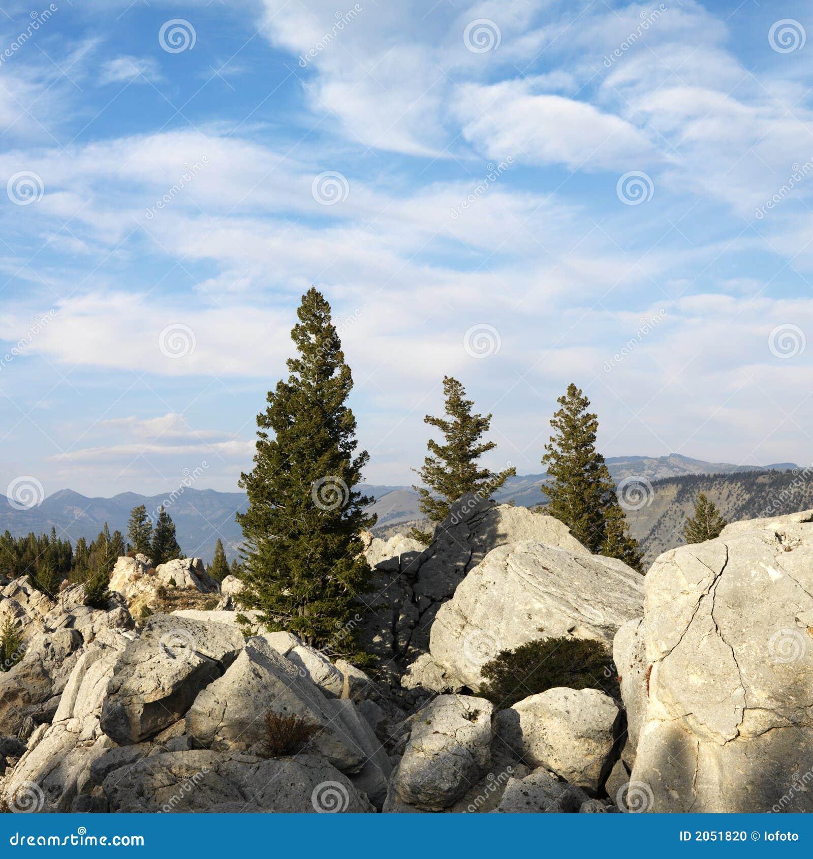 Alberi del evergreen di spirito di paesaggio