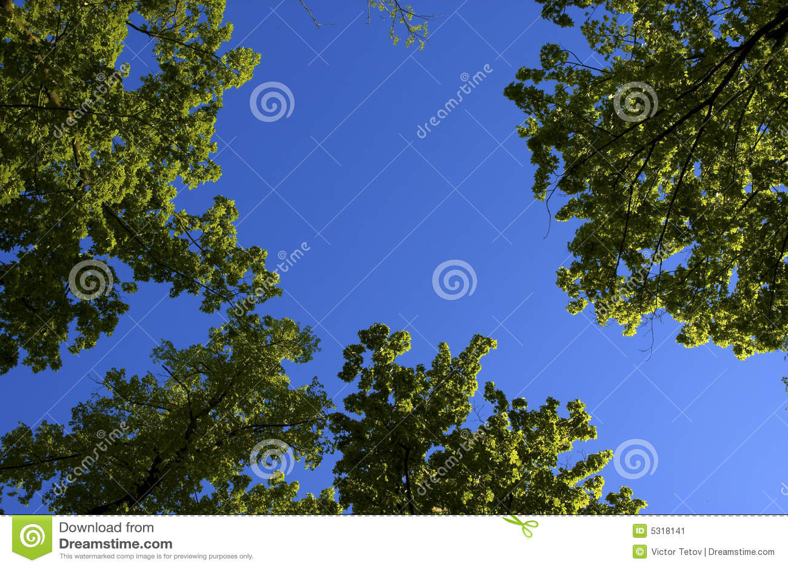 Download Alberi della sorgente immagine stock. Immagine di mezzogiorno - 5318141