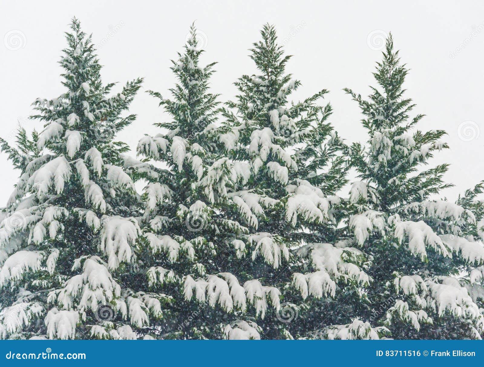 Alberi dello Snowy