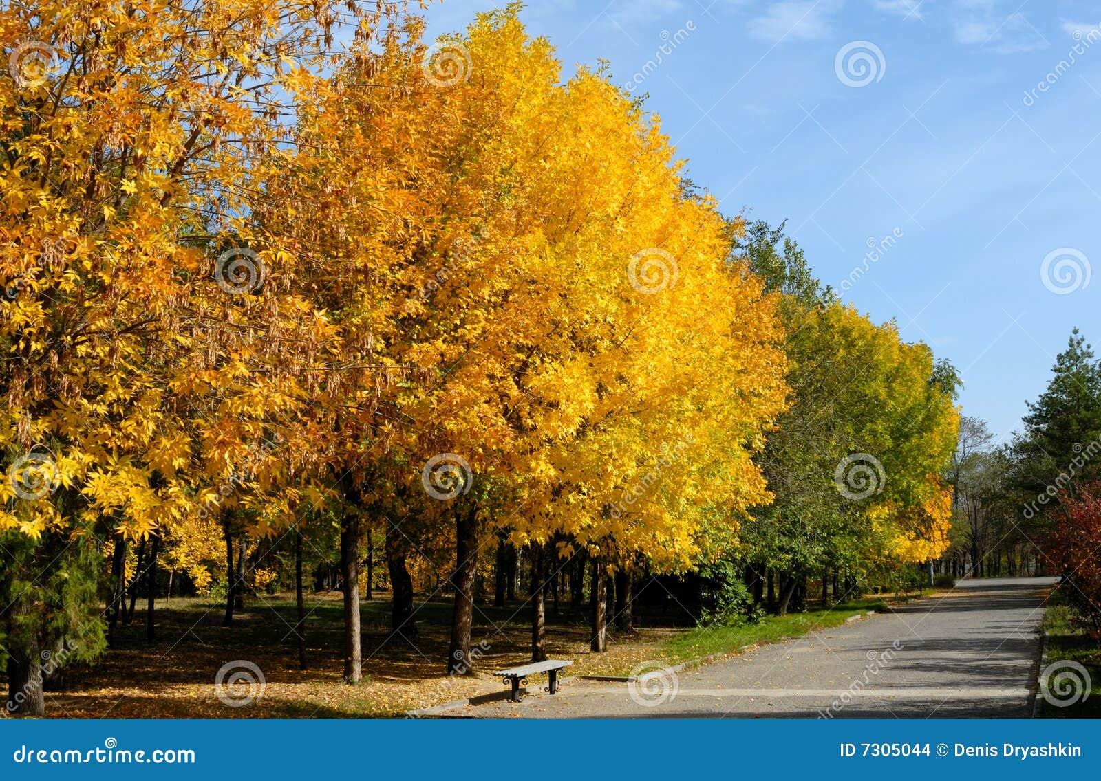 Alberi di autunno