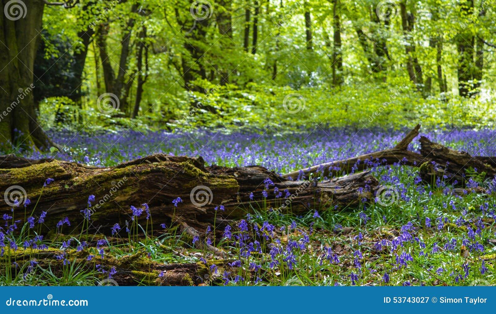 Alberi di campanule vecchio ramo fotografia stock - Alberi bassi da giardino ...