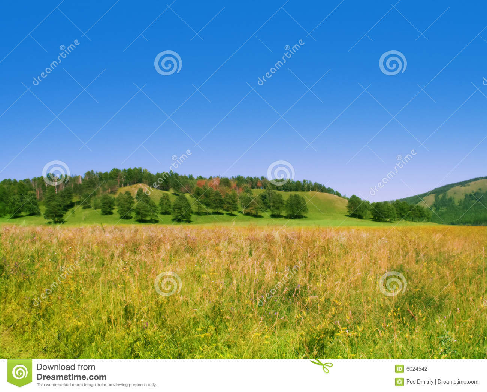 Alberi di estate della collina del campo fotografia stock for Planimetrie del paese di collina