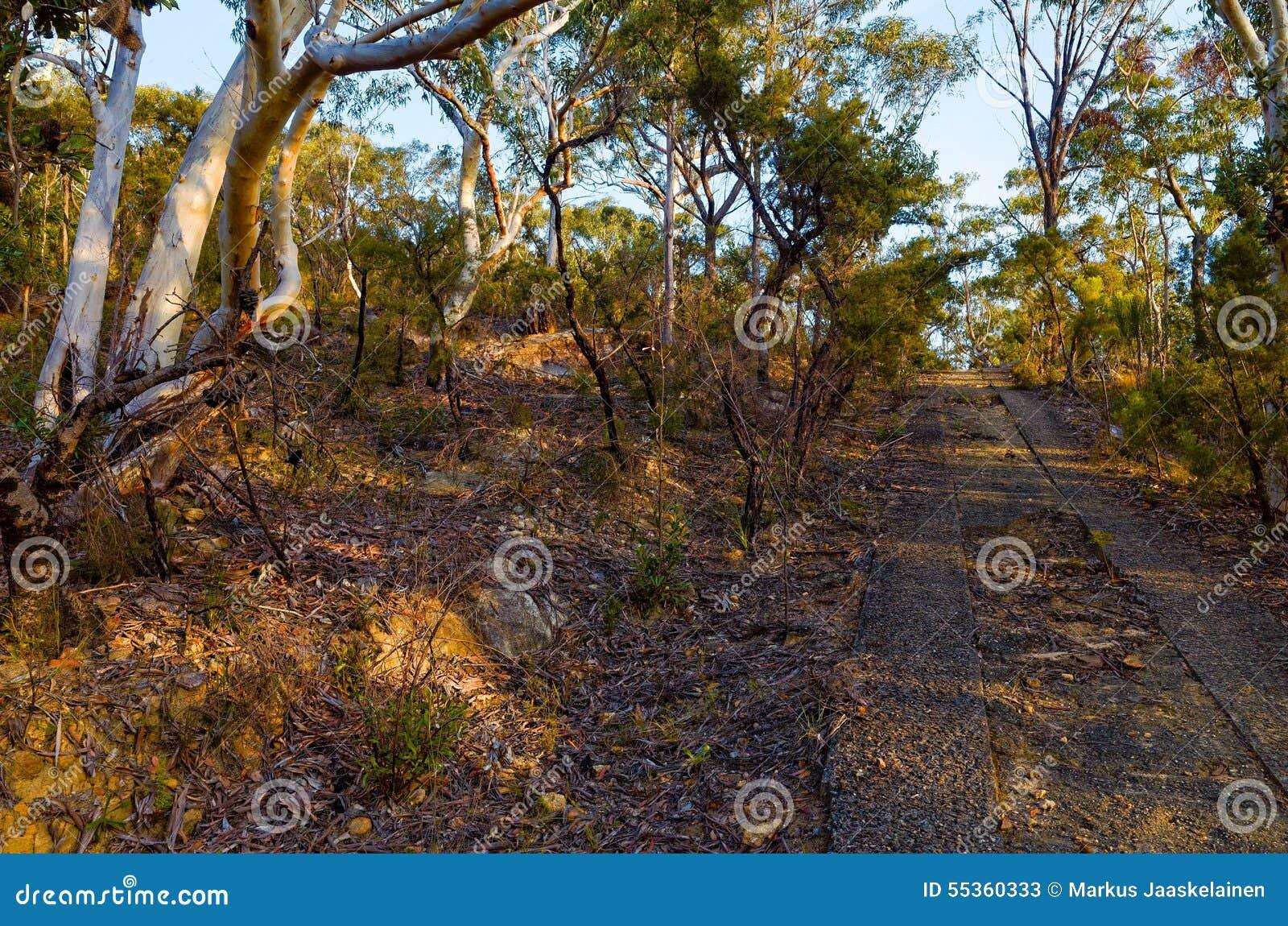 Alberi di eucalyptus lungo un tratto scartato della strada