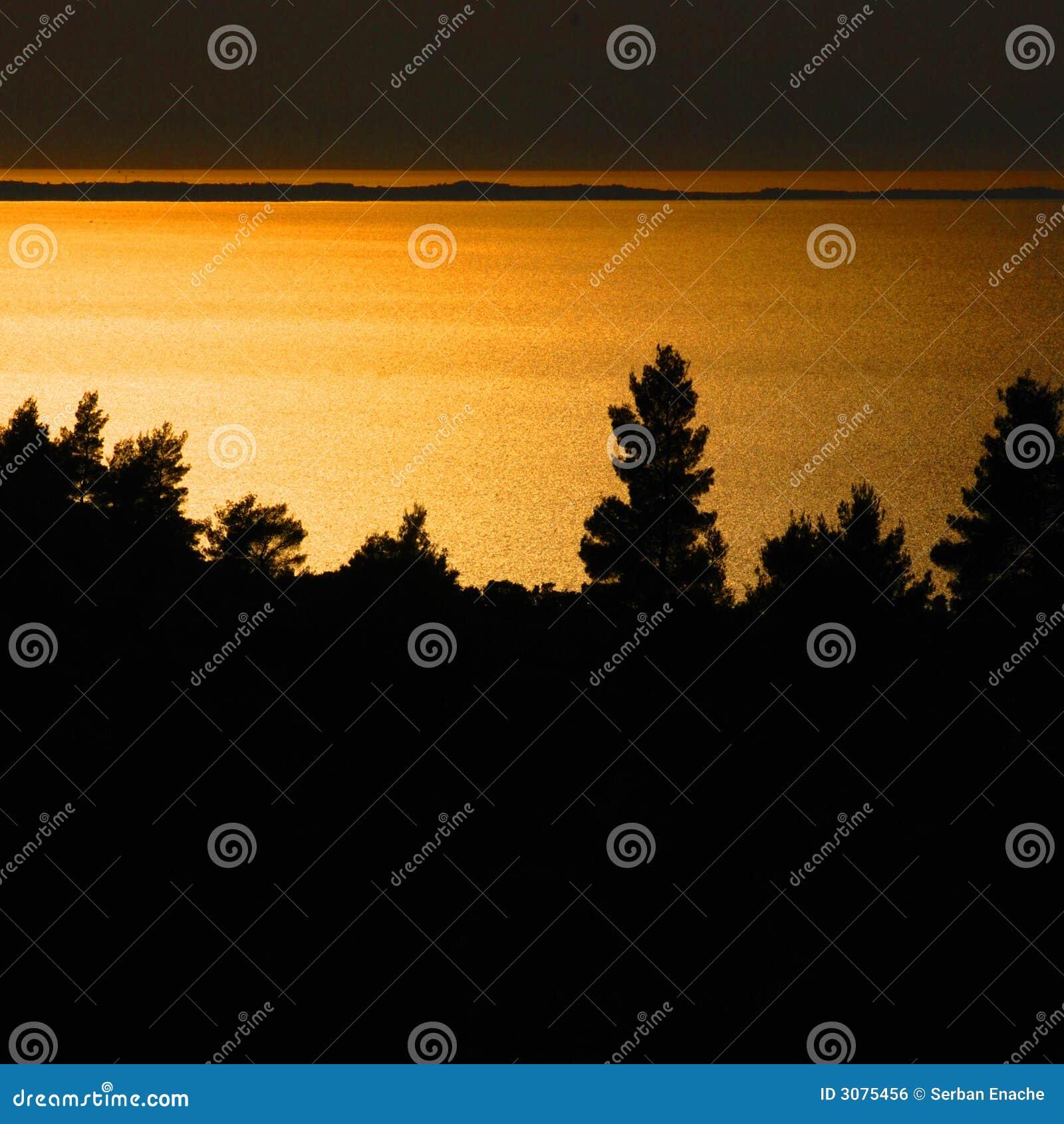 Alberi di pino al tramonto