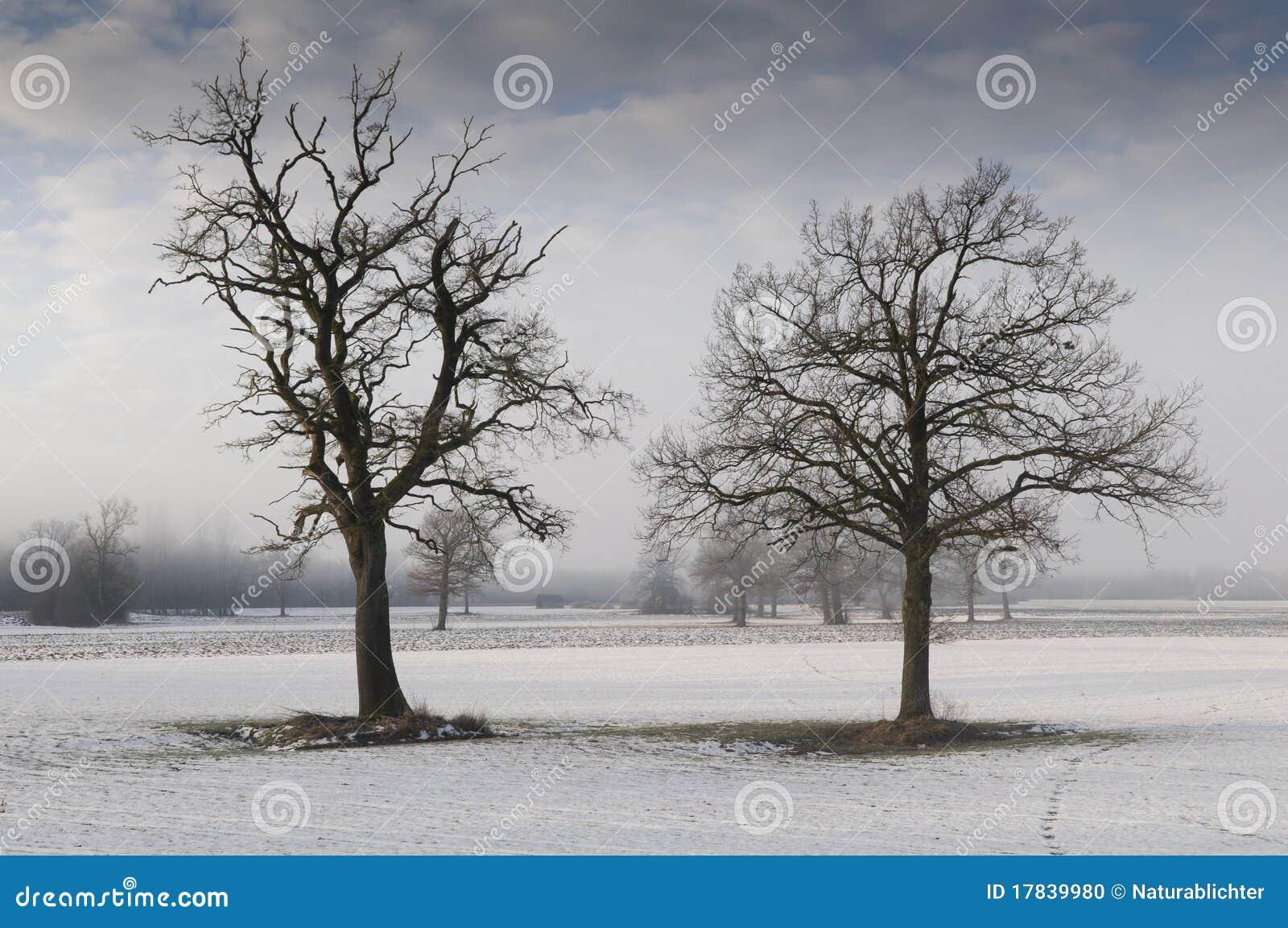 Alberi di quercia nel paesaggio invernale fotografia stock for Disegni paesaggio invernale