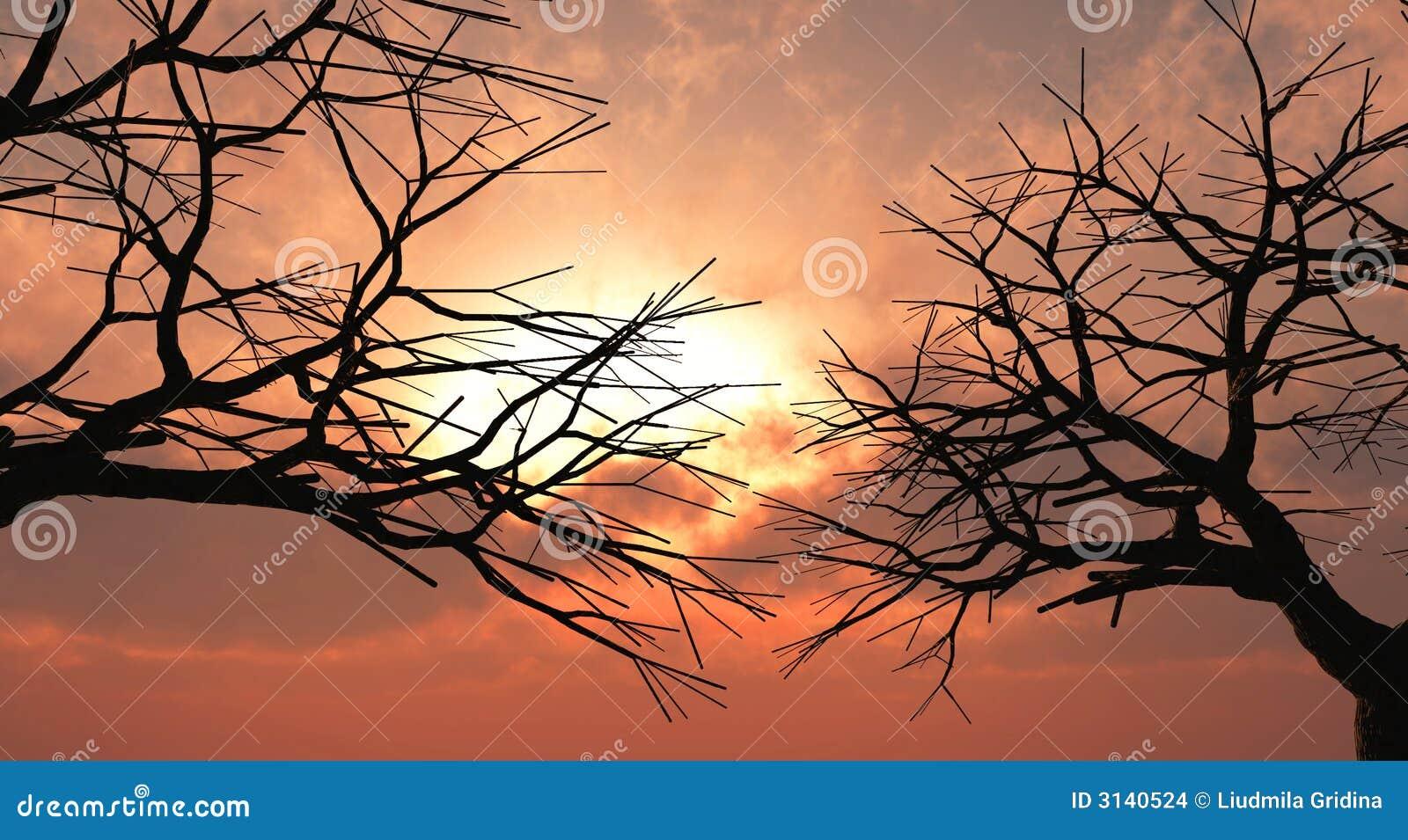 Alberi di tramonto