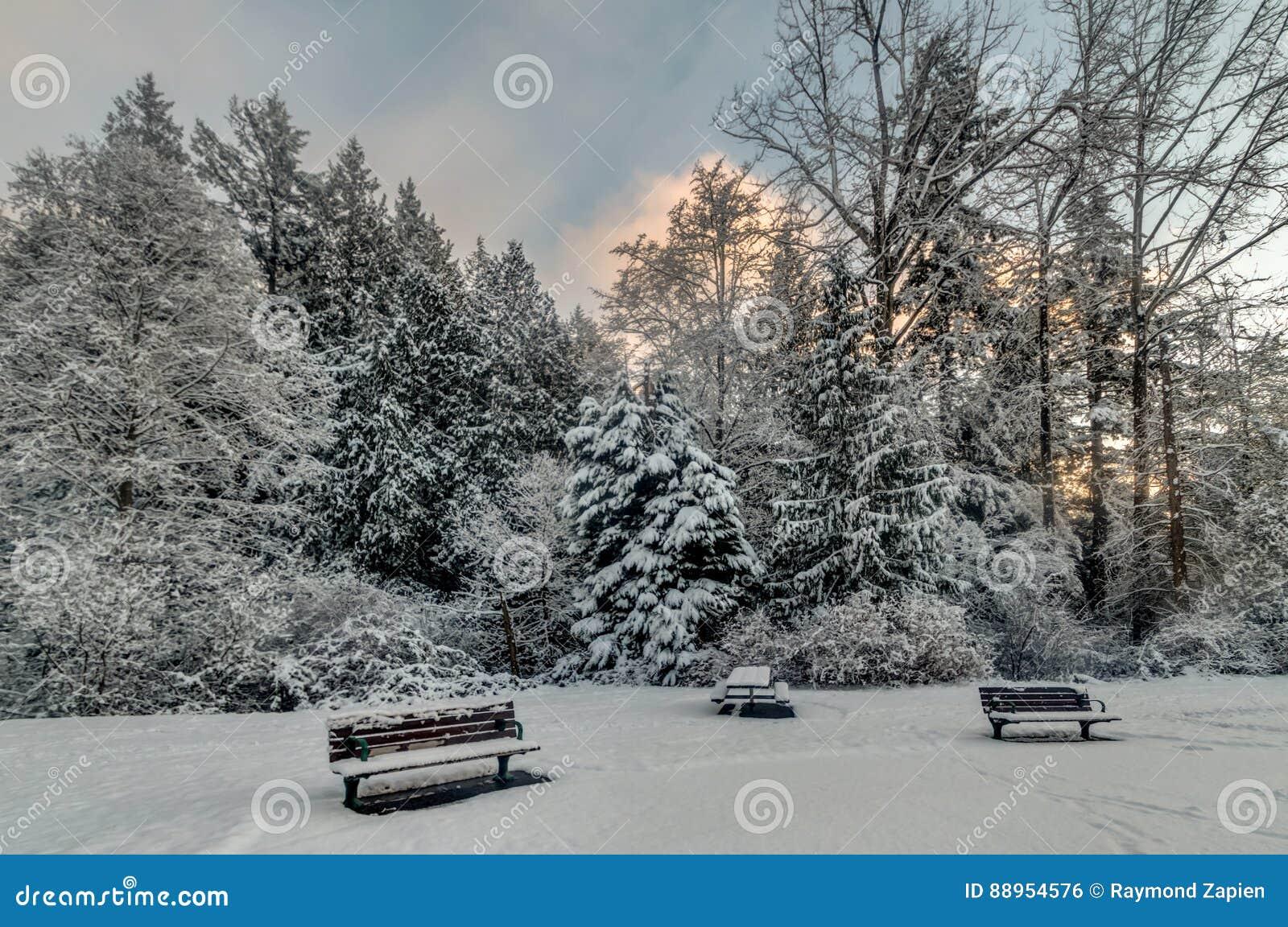 Alberi e banchi di Snowy