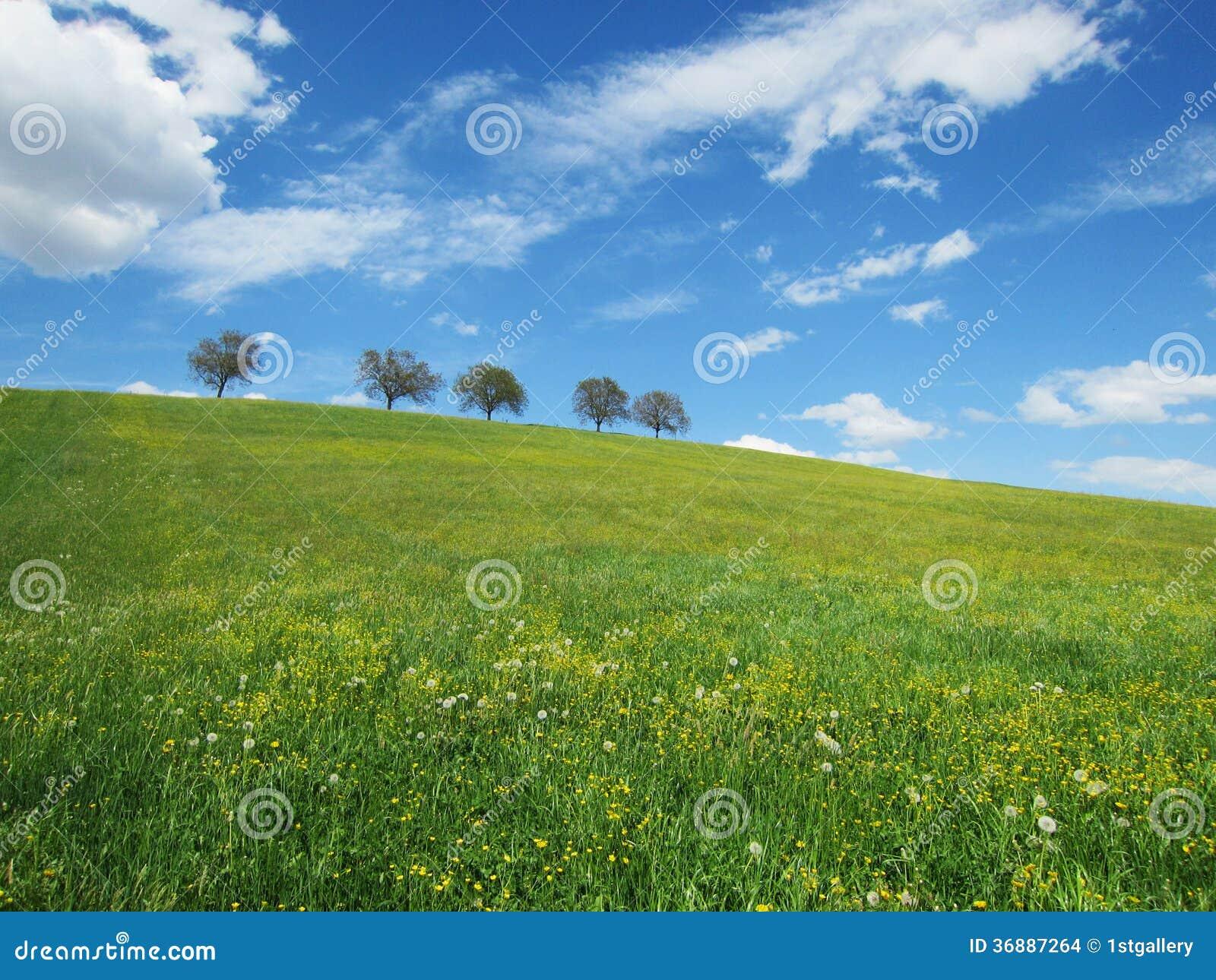 Download Alberi e cielo (19) fotografia stock. Immagine di verde - 36887264