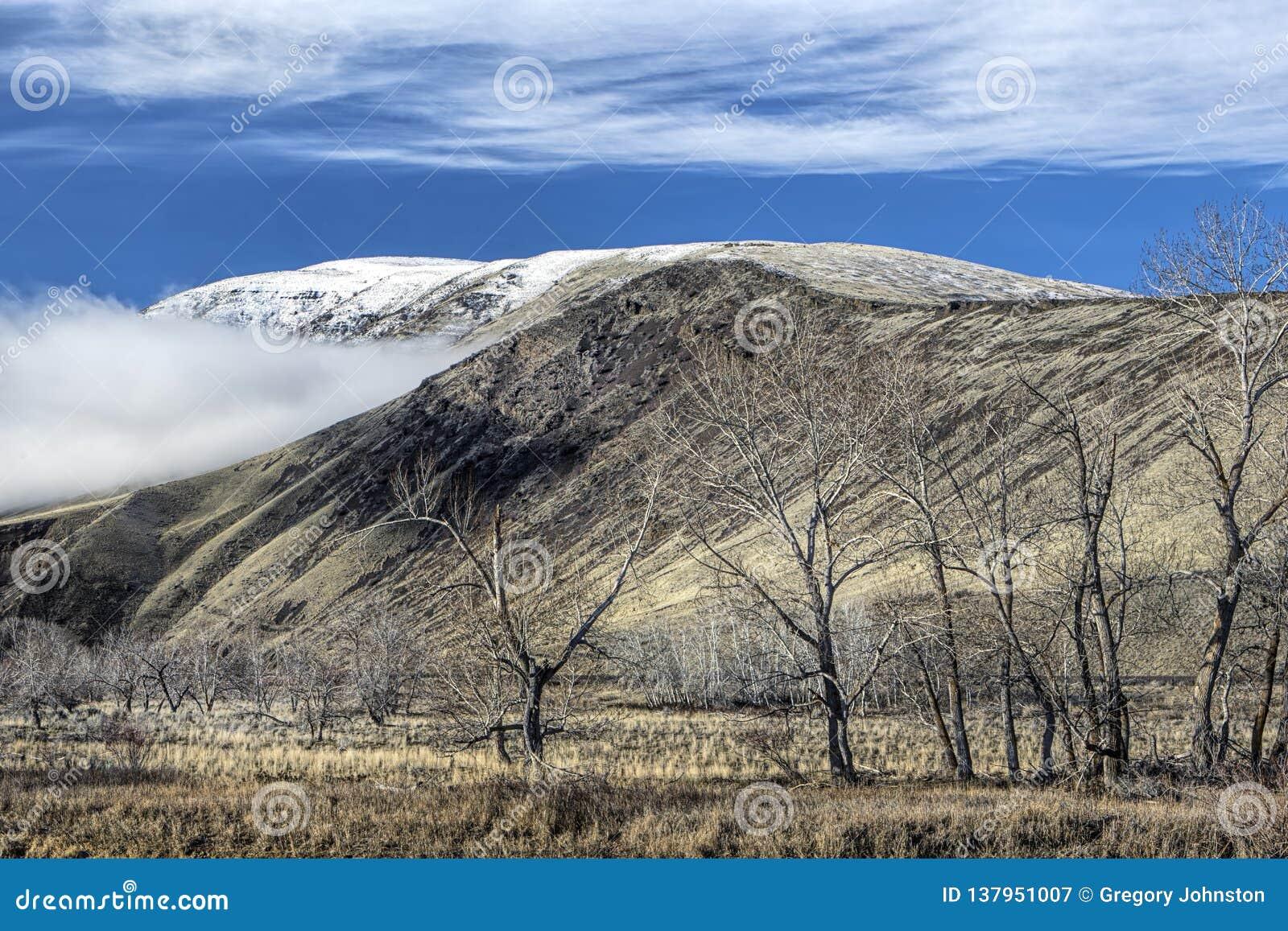 Alberi e montagne sterili a Washington